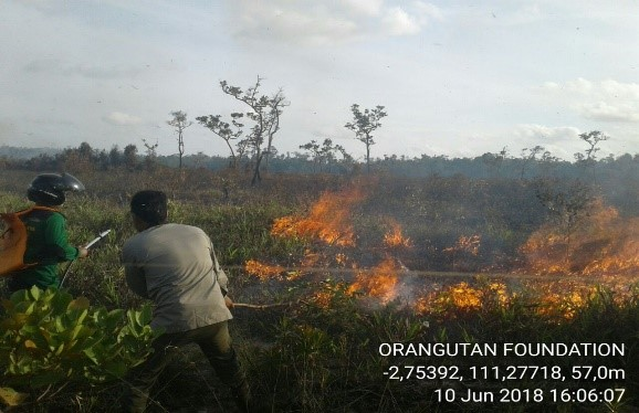Throughout 2018, fires threatened the wildlife reserve and national park. Orangutan Foundation guard post are equipped with water jet shooter packs, hosing and pumps. and work closely with government organisations to prevent and extinguish fires.