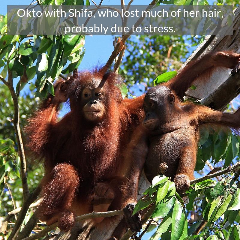 Okto with Shifa, who.jpg