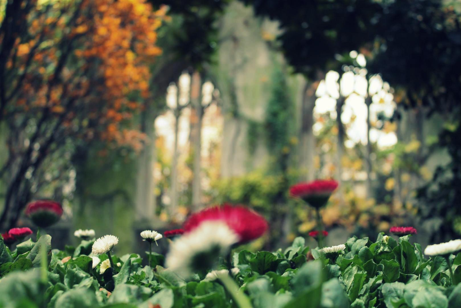 Secret Gardens - Explore the city's beautiful hidden gardens