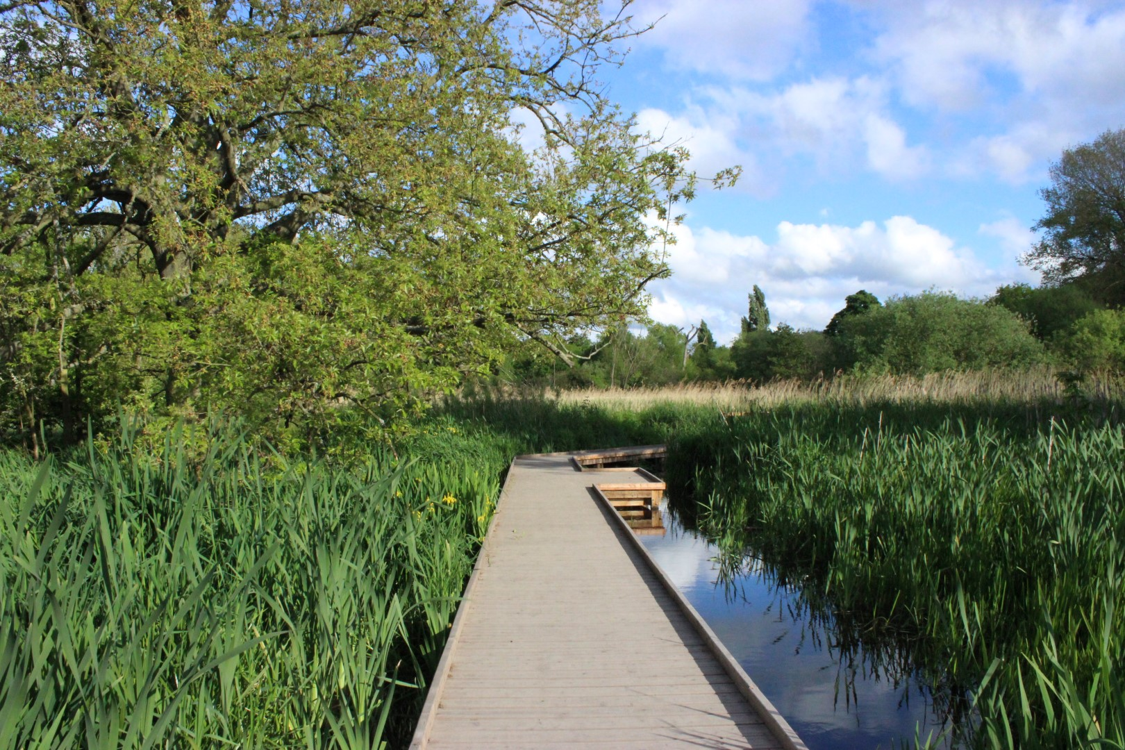 River Wandle - Explore an animal farm, markets, the remains of an old chapter house and a National Trust park