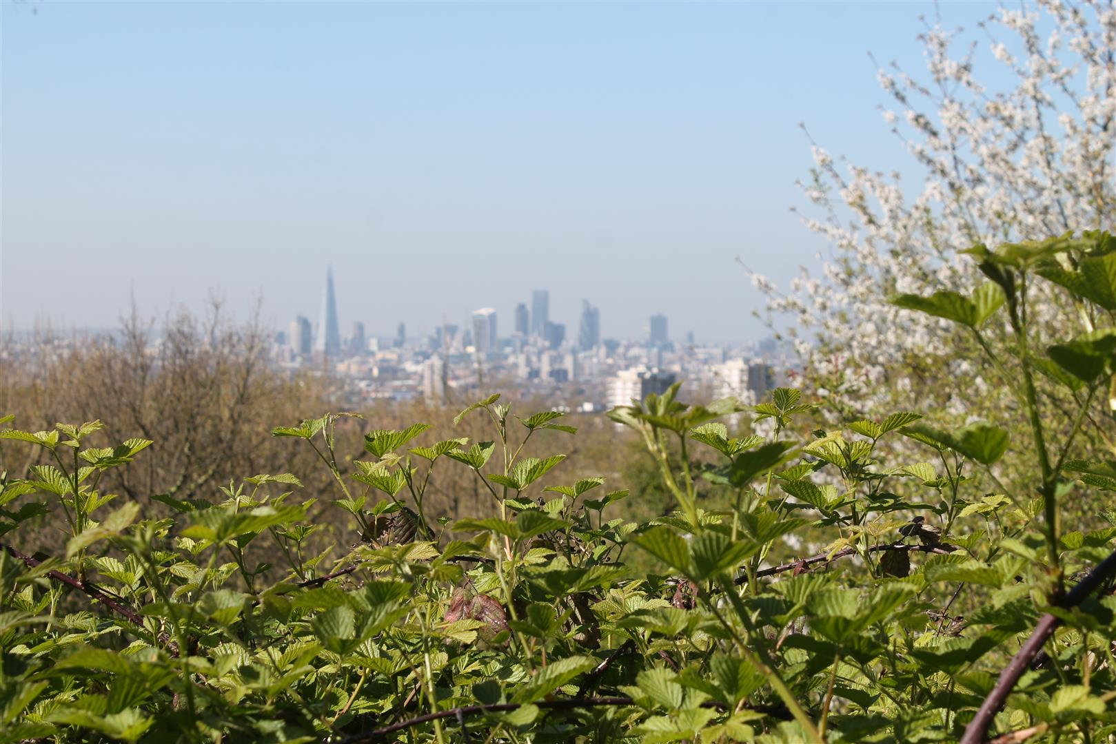 Forest Hill - Explore the wondrous Horniman's Museum, hidden nature reserves, quirky galleries and artist studios