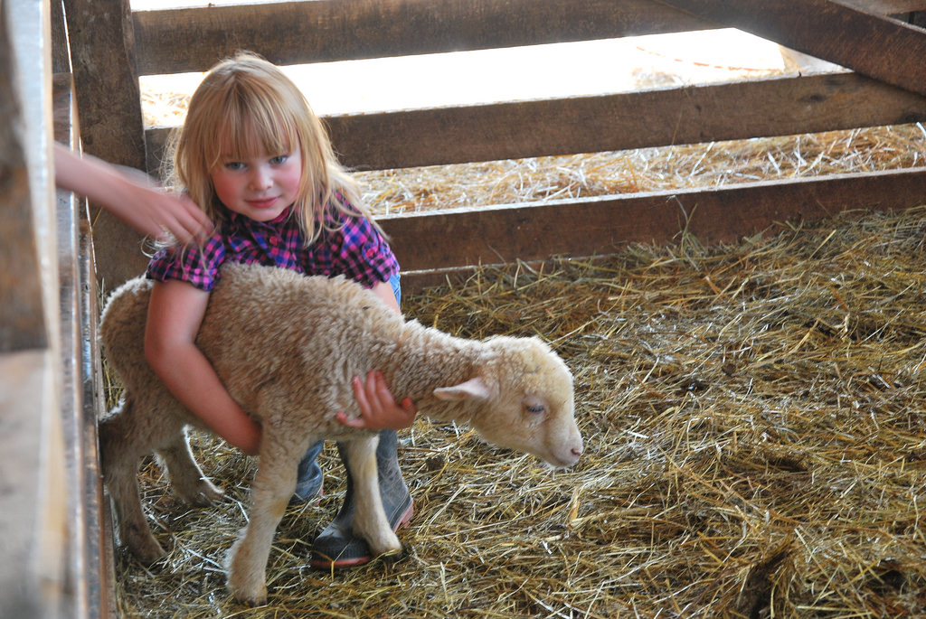 Daughter-with-young-lamb.jpg