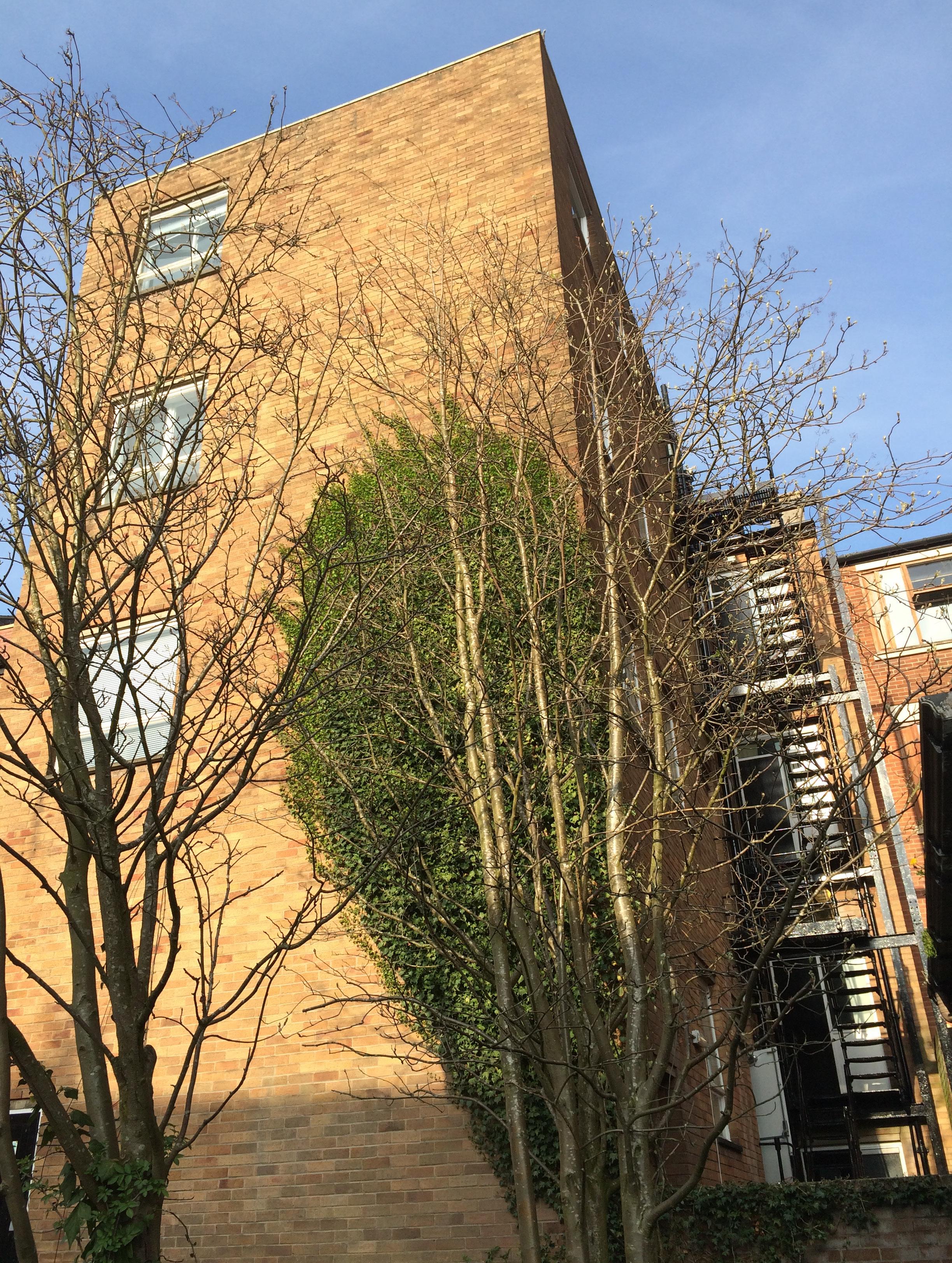 29 Winckley Sq - Rear of Property (2).jpg