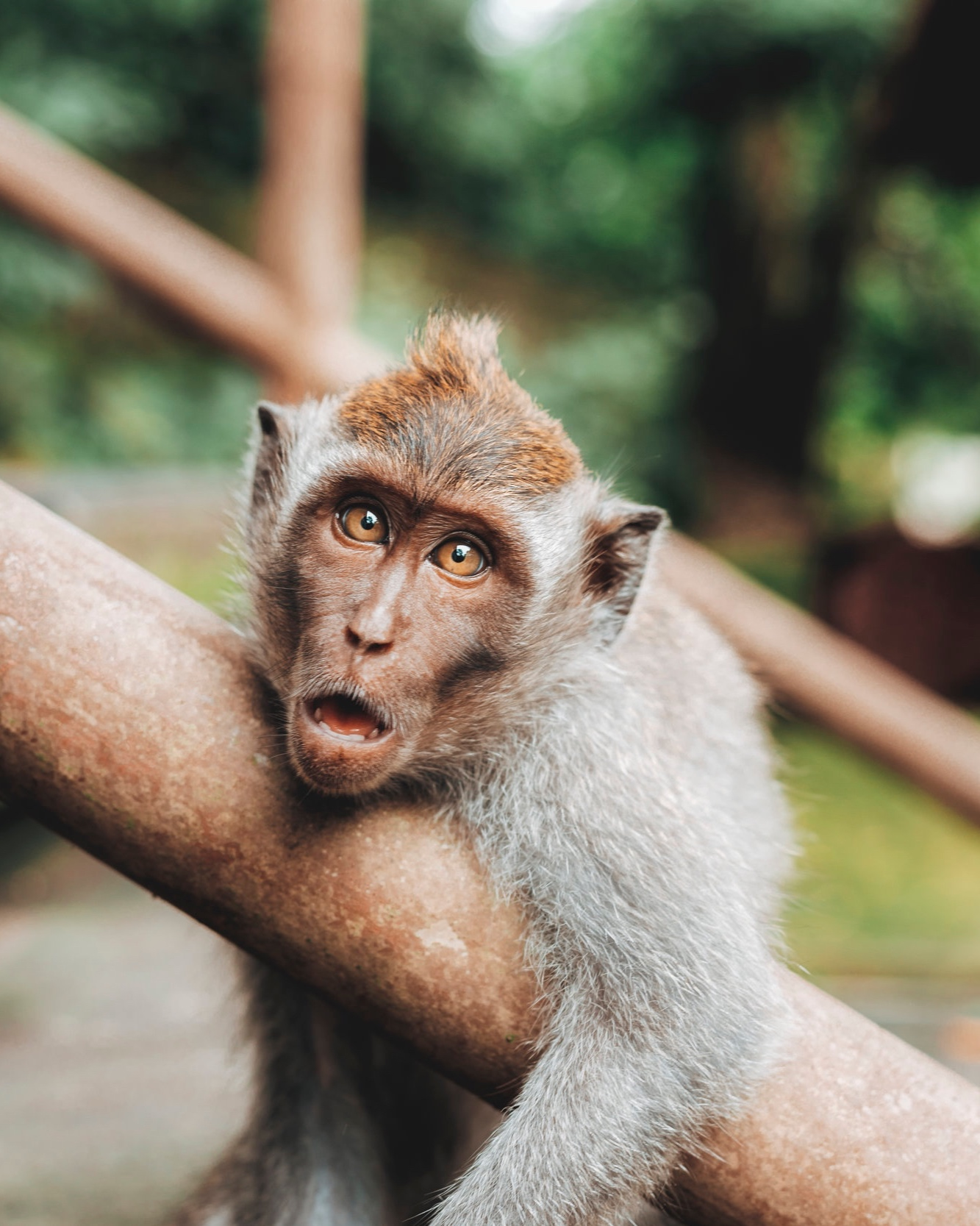 You and your monkey mind - …it can be exhausting.