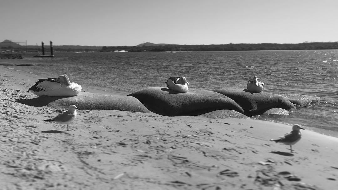 Pelican beach, Australia.