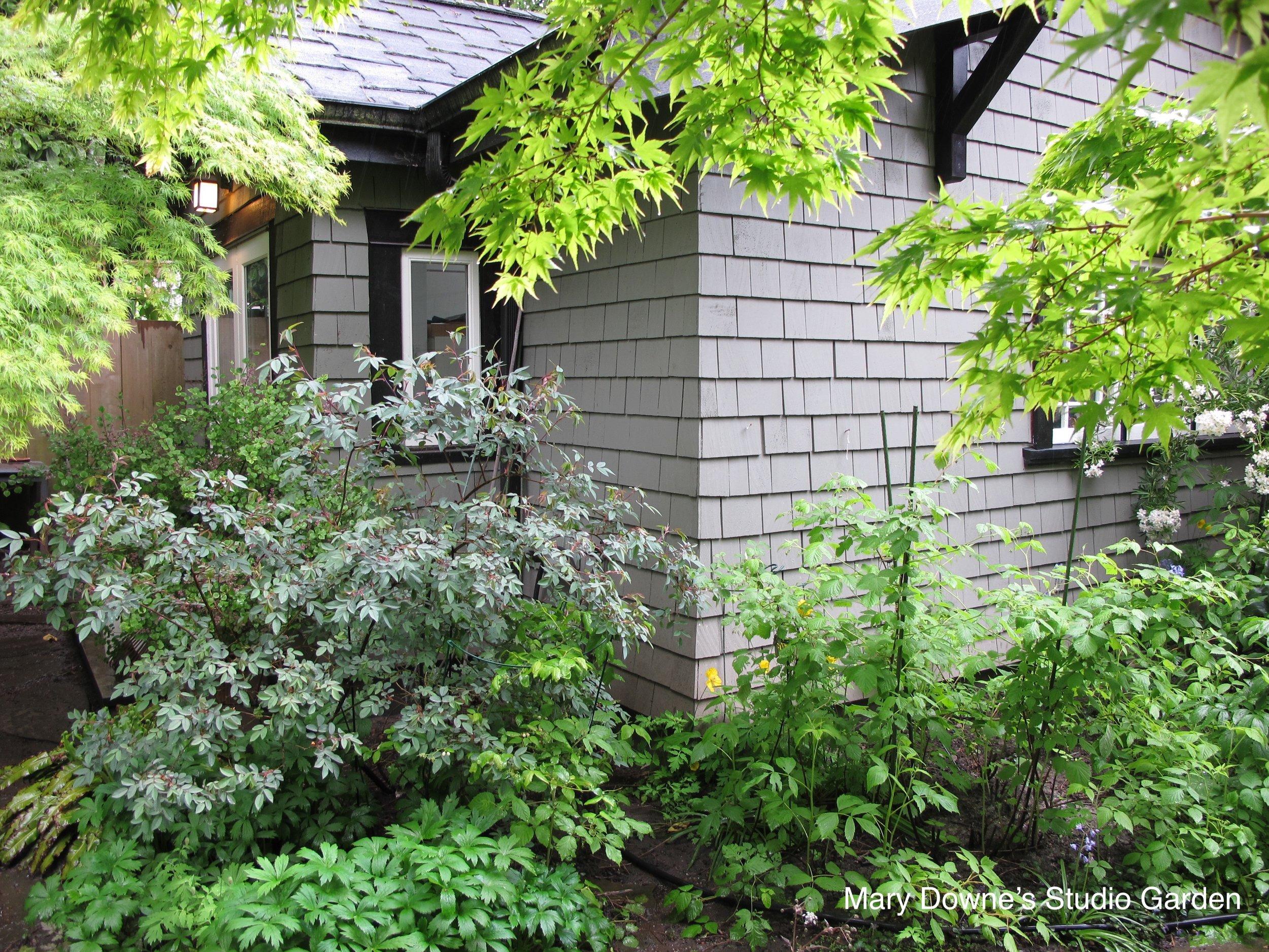 Mary Downe's studio garden.jpg