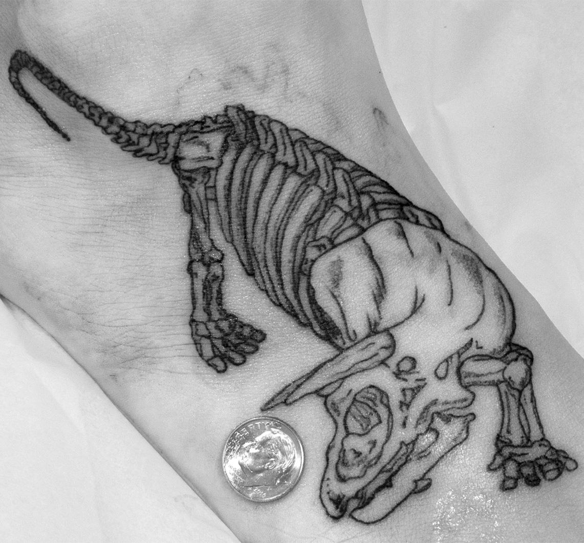 Nick Dorset triceratops foot.jpg