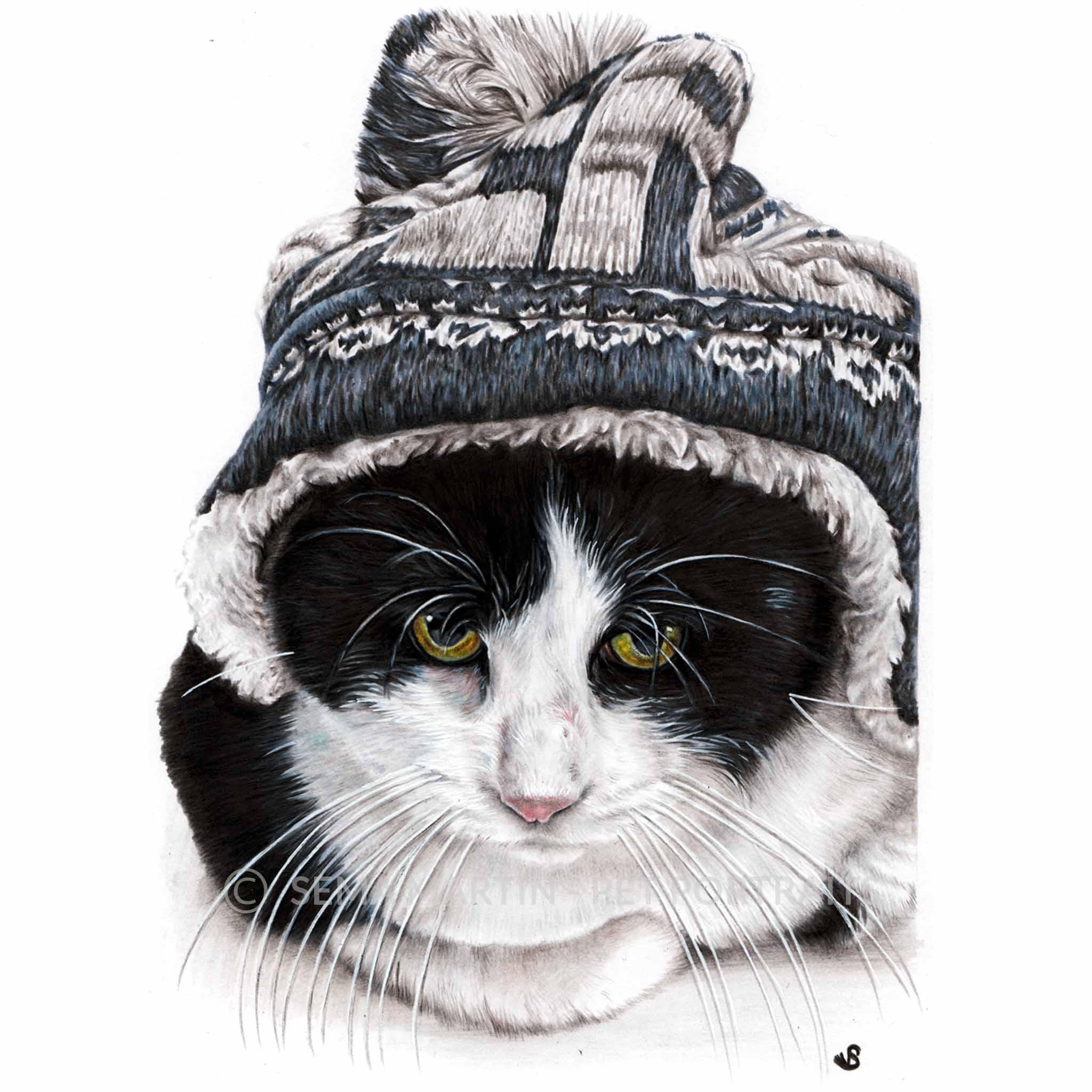 'Luna Lovegroove' - Malta, 8.3 x 11.7 inches, 2018, Colour Pencil Cat Portrait by Sema Martin