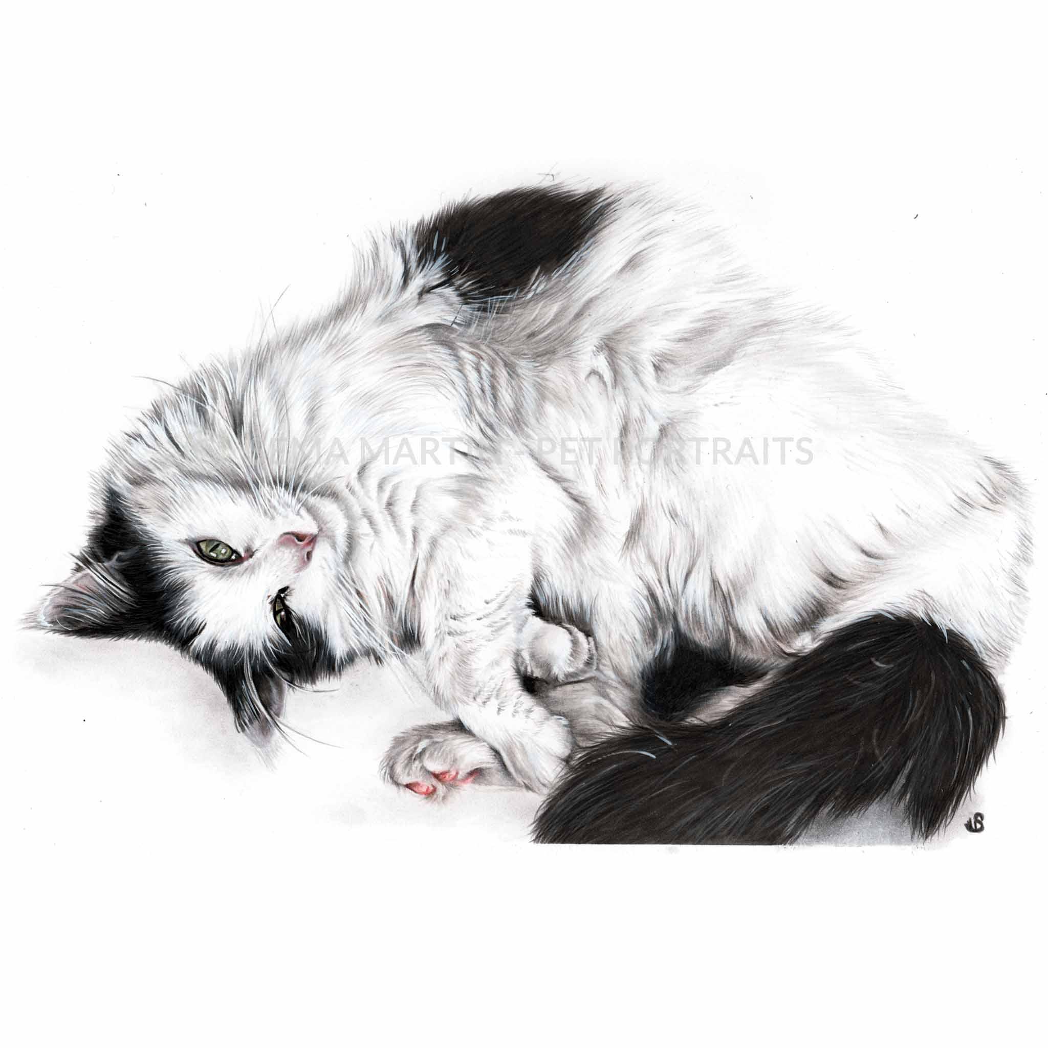 'Mr Wiggles' - NZ, 8.3 x 11.7 inches, 2018, Colour Pencil Cat Portrait by Sema Martin