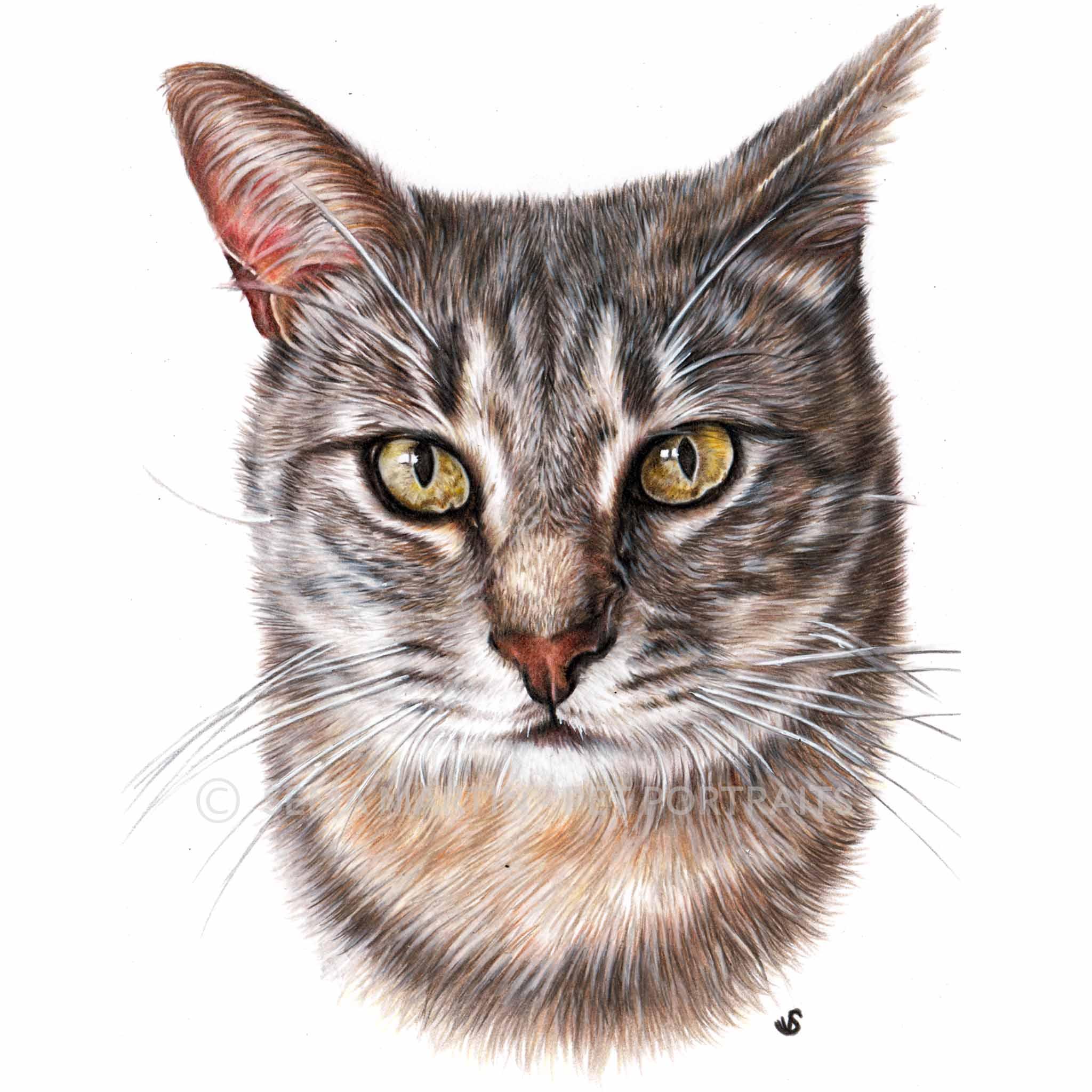 'Jeriko' - SPA, 5.8 x 8.3 inches, 2018, Colour Pencil Cat Portrait by Sema Martin