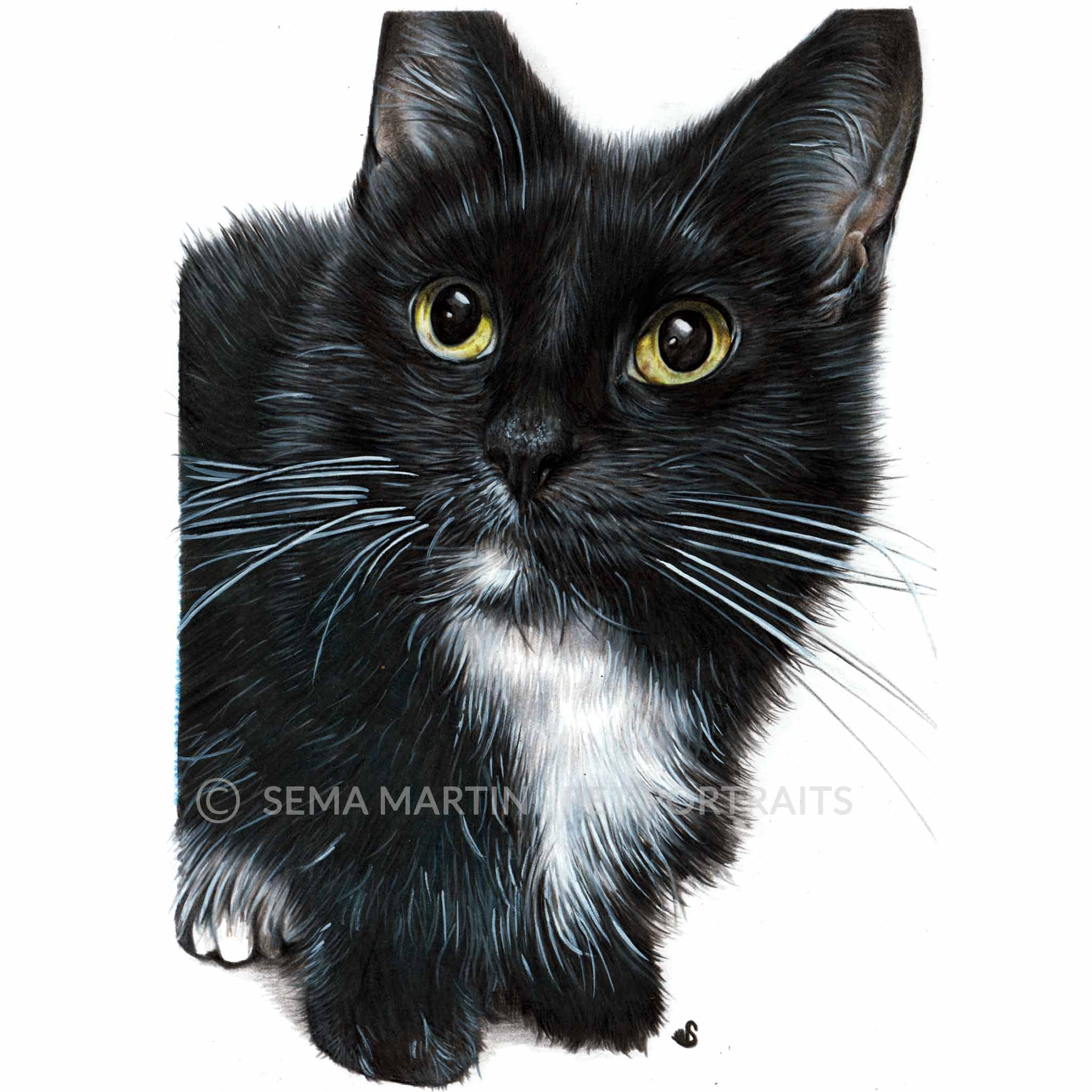 'Charlie' - USA, 5.8 x 8.3 inches, 2018, Colour Pencil Cat Portrait by Sema Martin