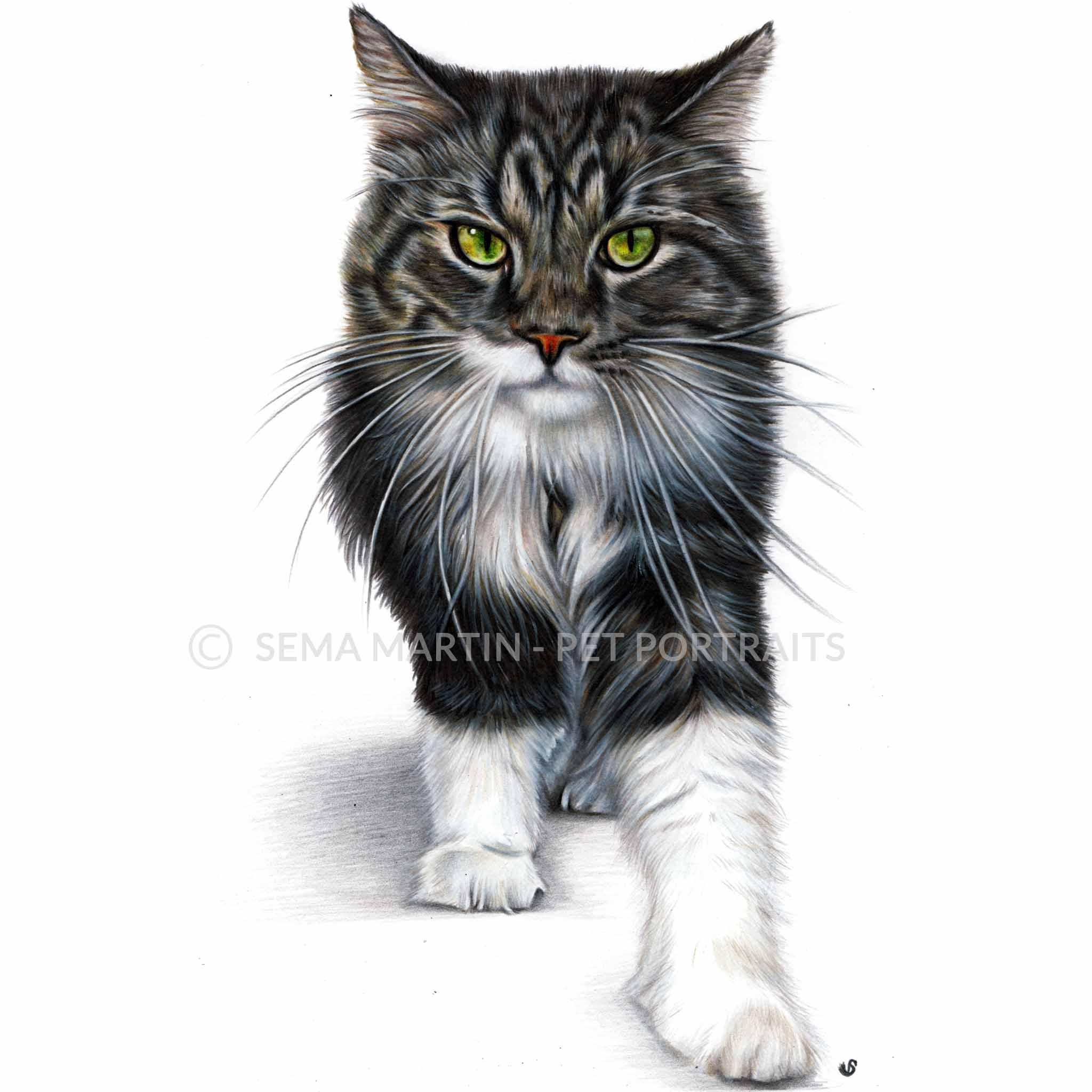 'Megatron' - USA, 8.3 x 11.7 inches, 2018, Colour Pencil Cat Portrait by Sema Martin