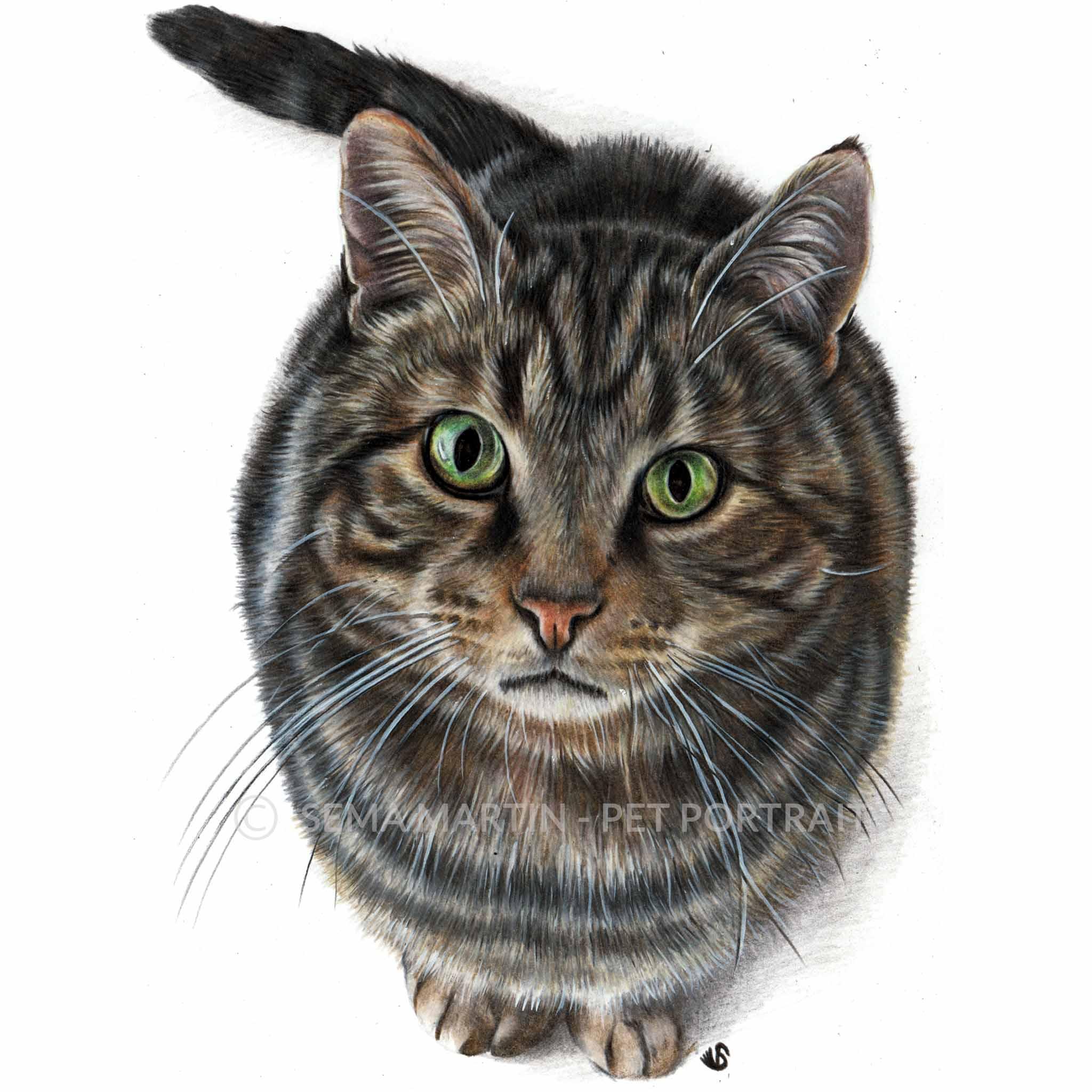 'Henry' - AUS, 5.8 x 8.3 inches, 2018, Colour Pencil Cat Portrait by Sema Martin