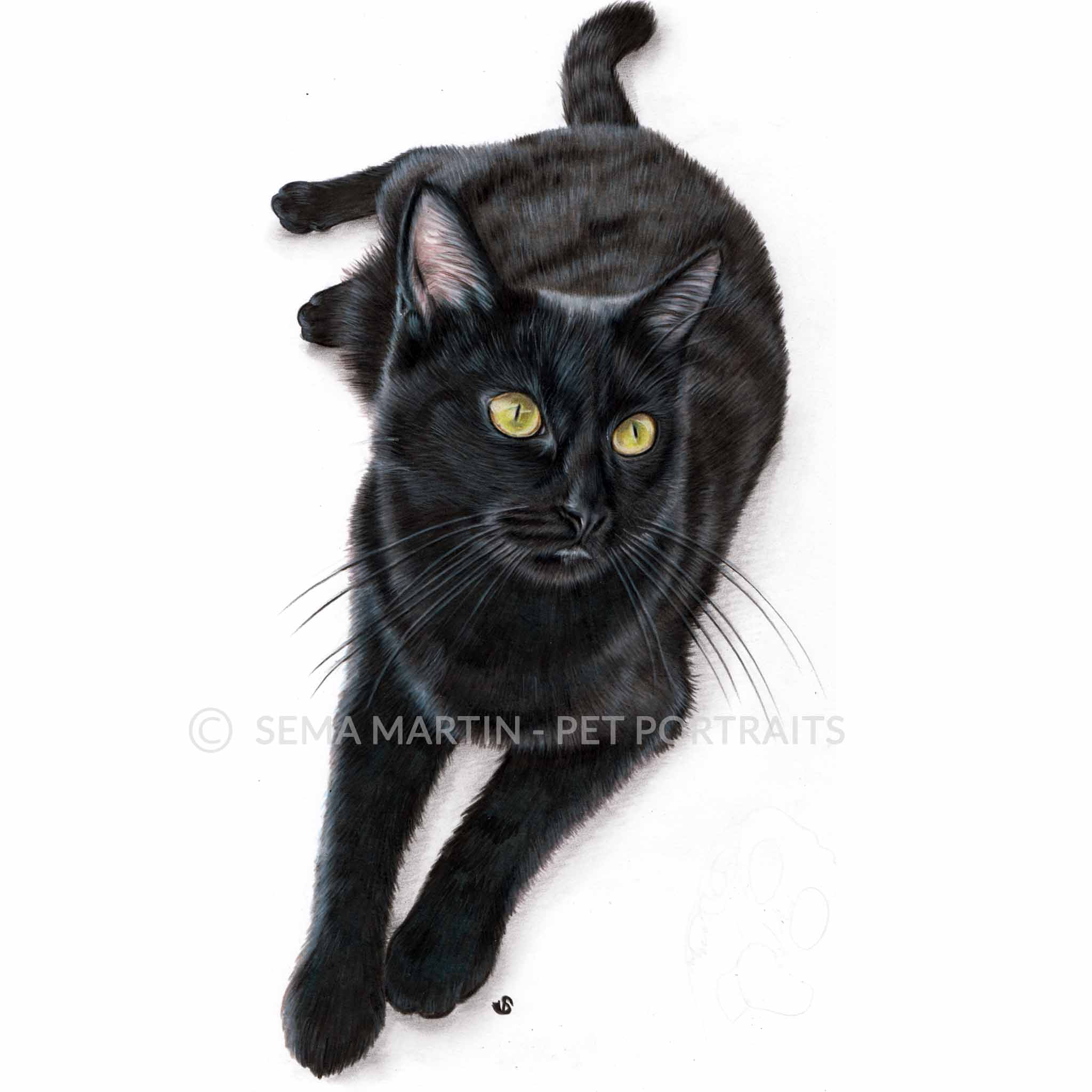 'Elsa' - UK, 8.3 x 11.7 inches, 2018, Colour Pencil Cat Portrait by Sema Martin