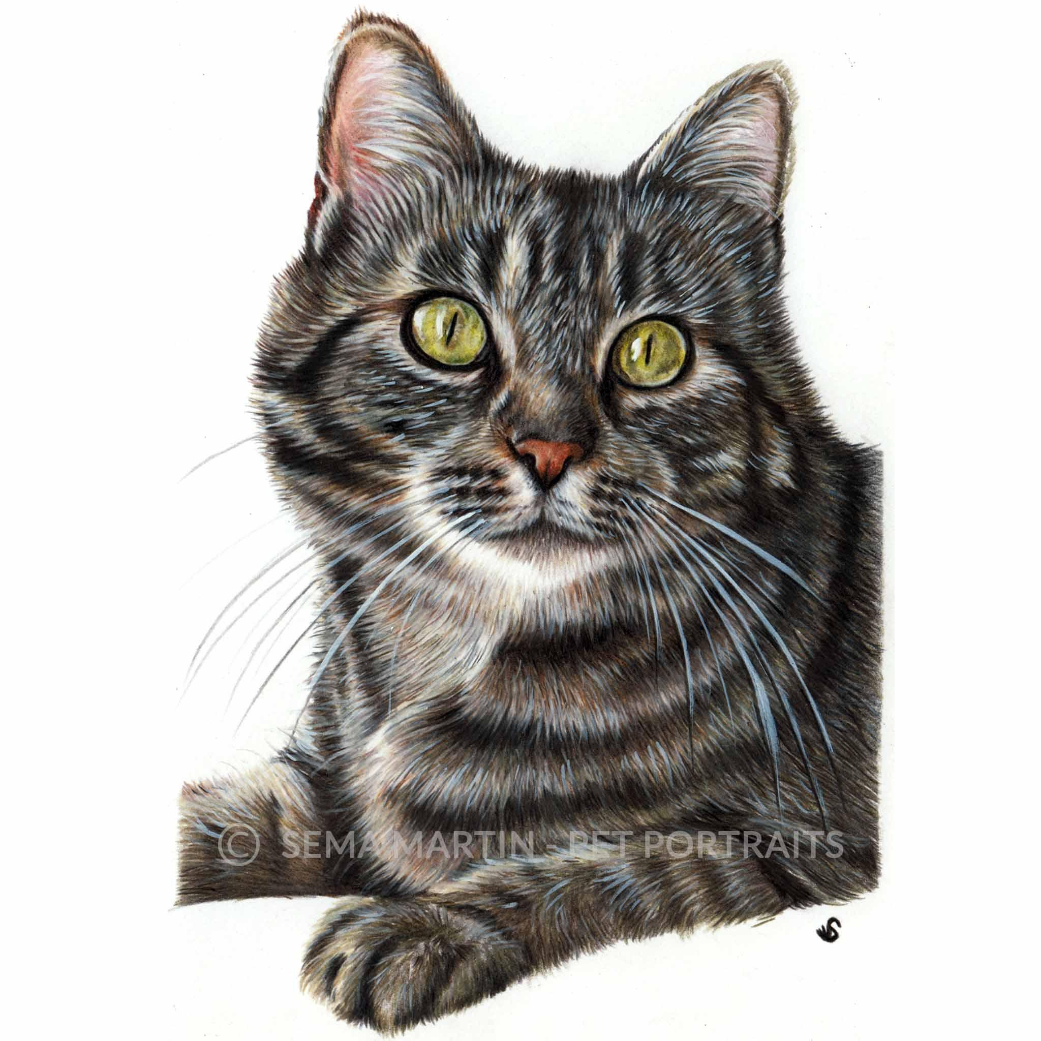 'Belle' - AUS, 5.3 x 8.5 inches, 2018, Colour Pencil Cat Portrait by Sema Martin