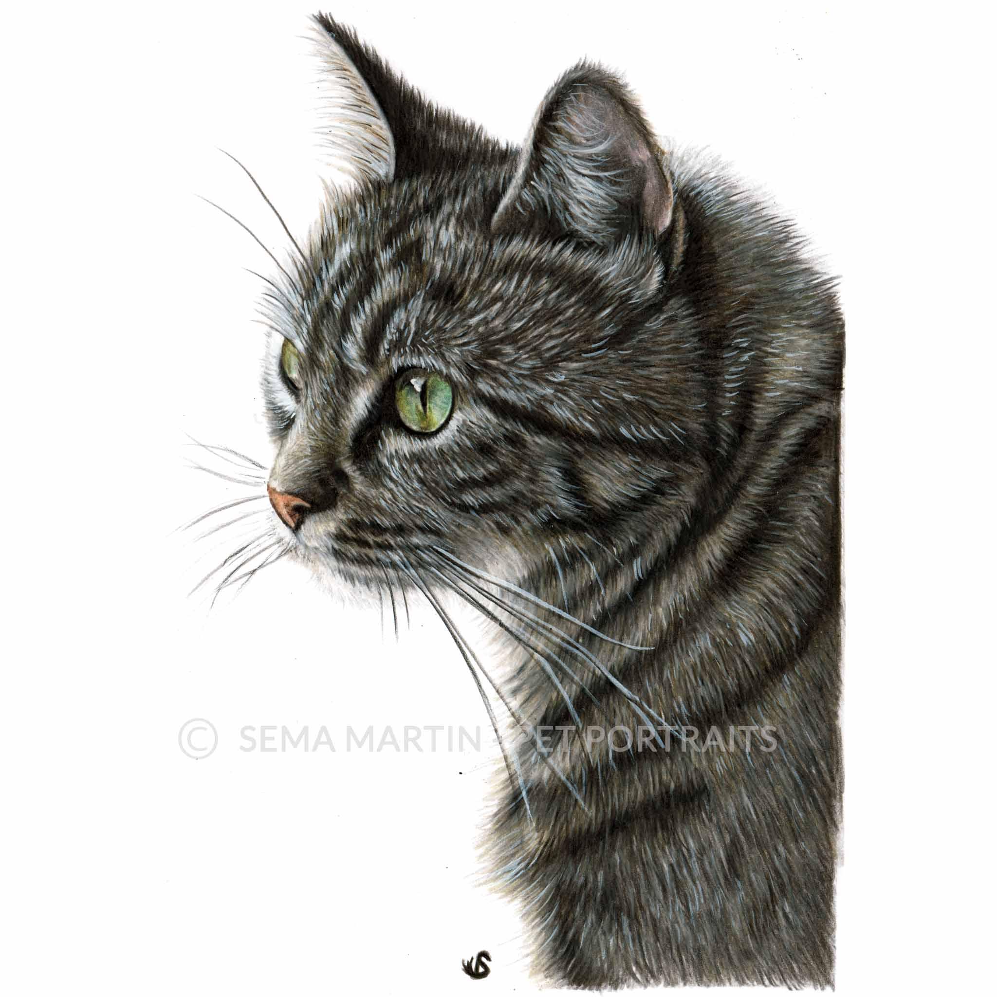 'Belle' - AUS, 5.8 x 8.3 inches, 2018, Colour Pencil Cat Portrait by Sema Martin