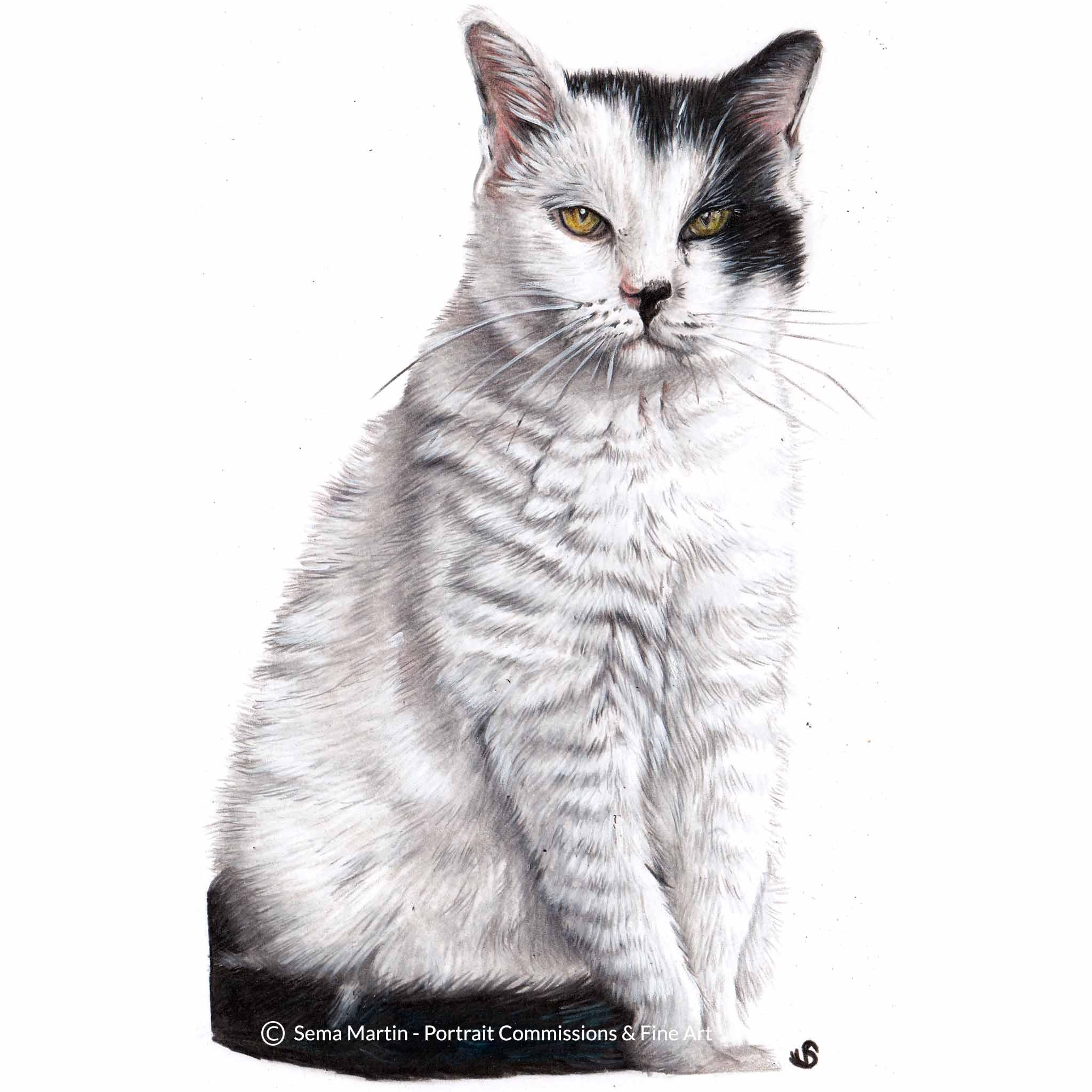 'General Wedge Antilles', USA, 5.8 x 8.3 inches, 2018, Colour Pencil Cat Portrait by Sema Martin