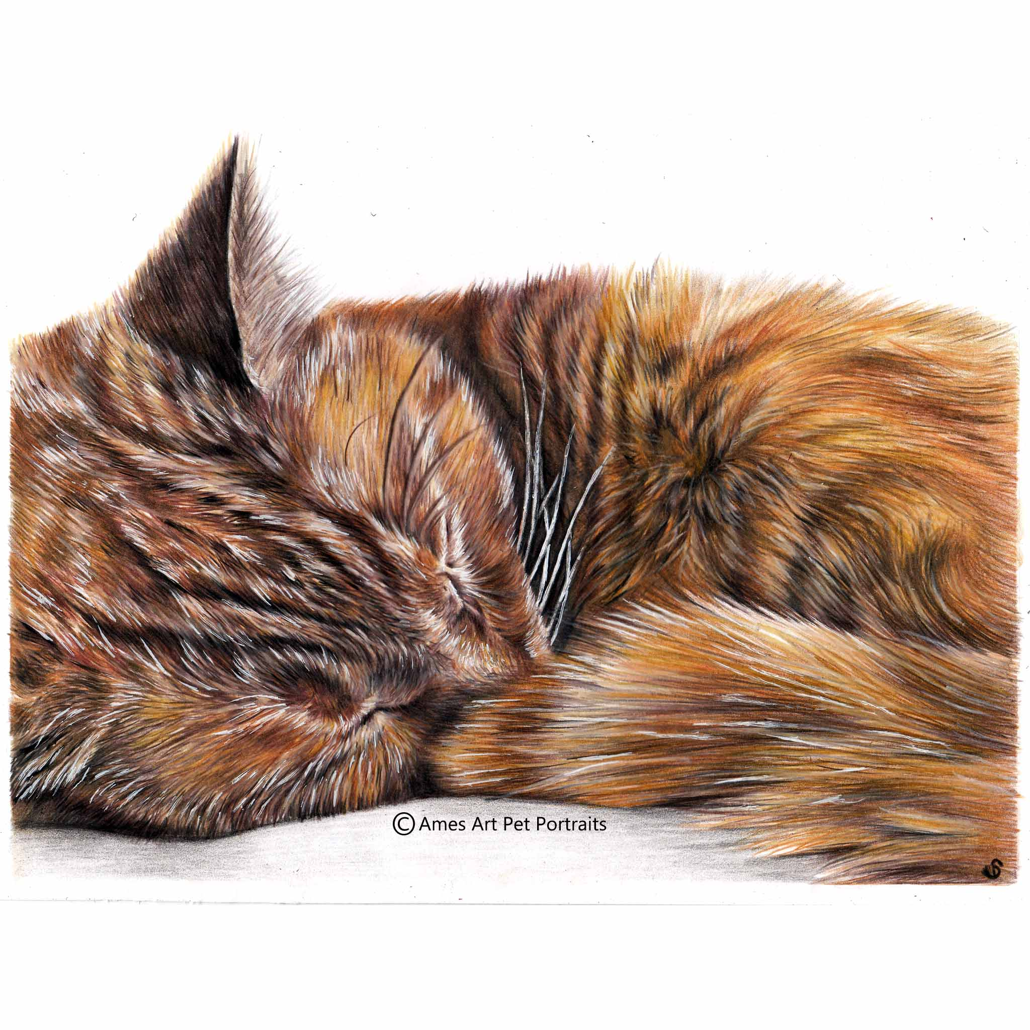 'Pee Wee' - USA, 8.3 x 11.7 inches, 2018, Colour Pencil Cat Portrait by Sema Martin