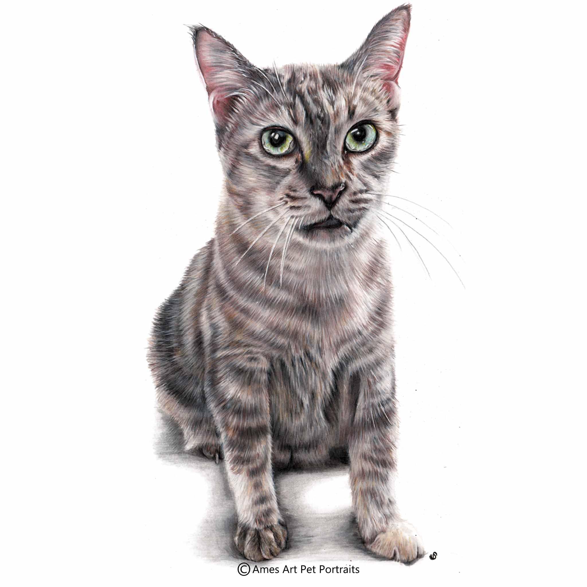 'Buddy' - Singapore, 11.7 x 16.5 in, 2017, Colour Pencil Cat Portrait by Sema Martin