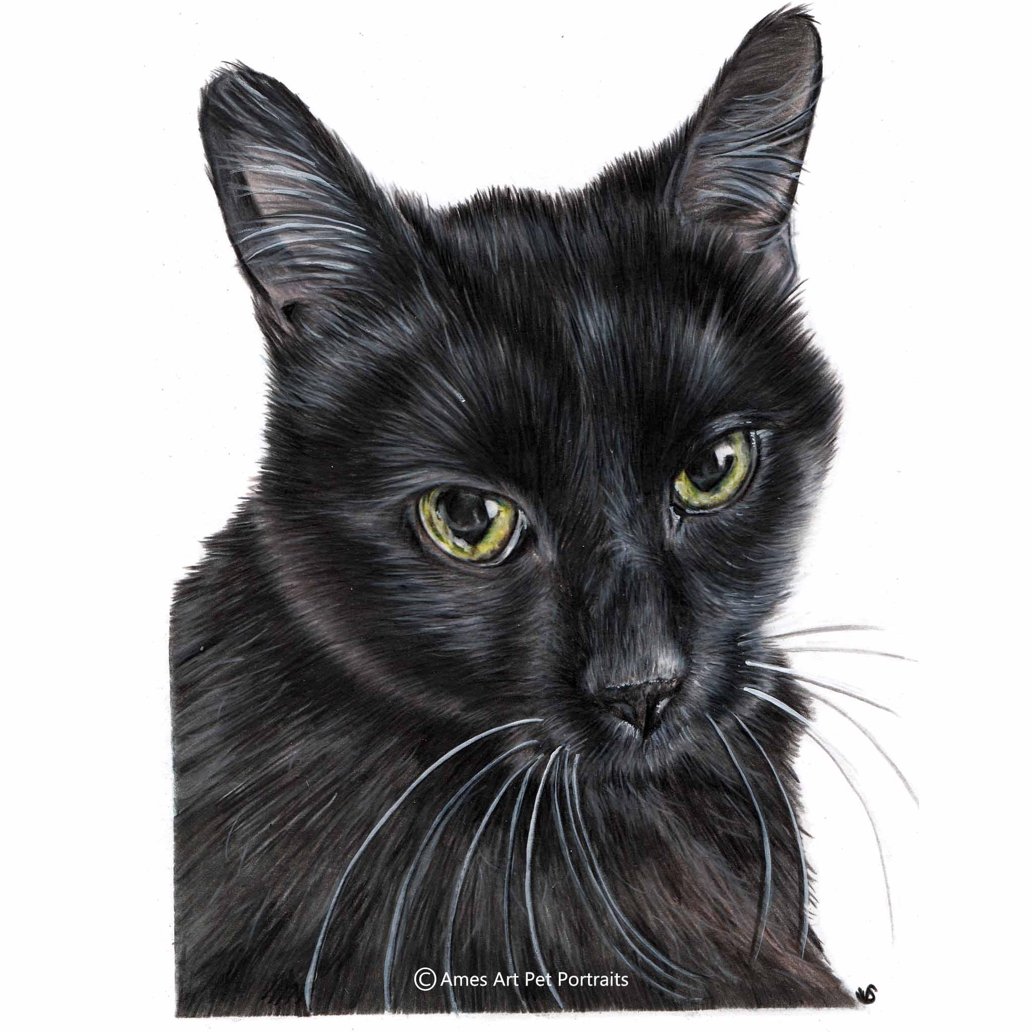 'Bella' - USA, 8.5 x 11.7 inches, 2017, Colour Pencil Cat Portrait by Sema Martin