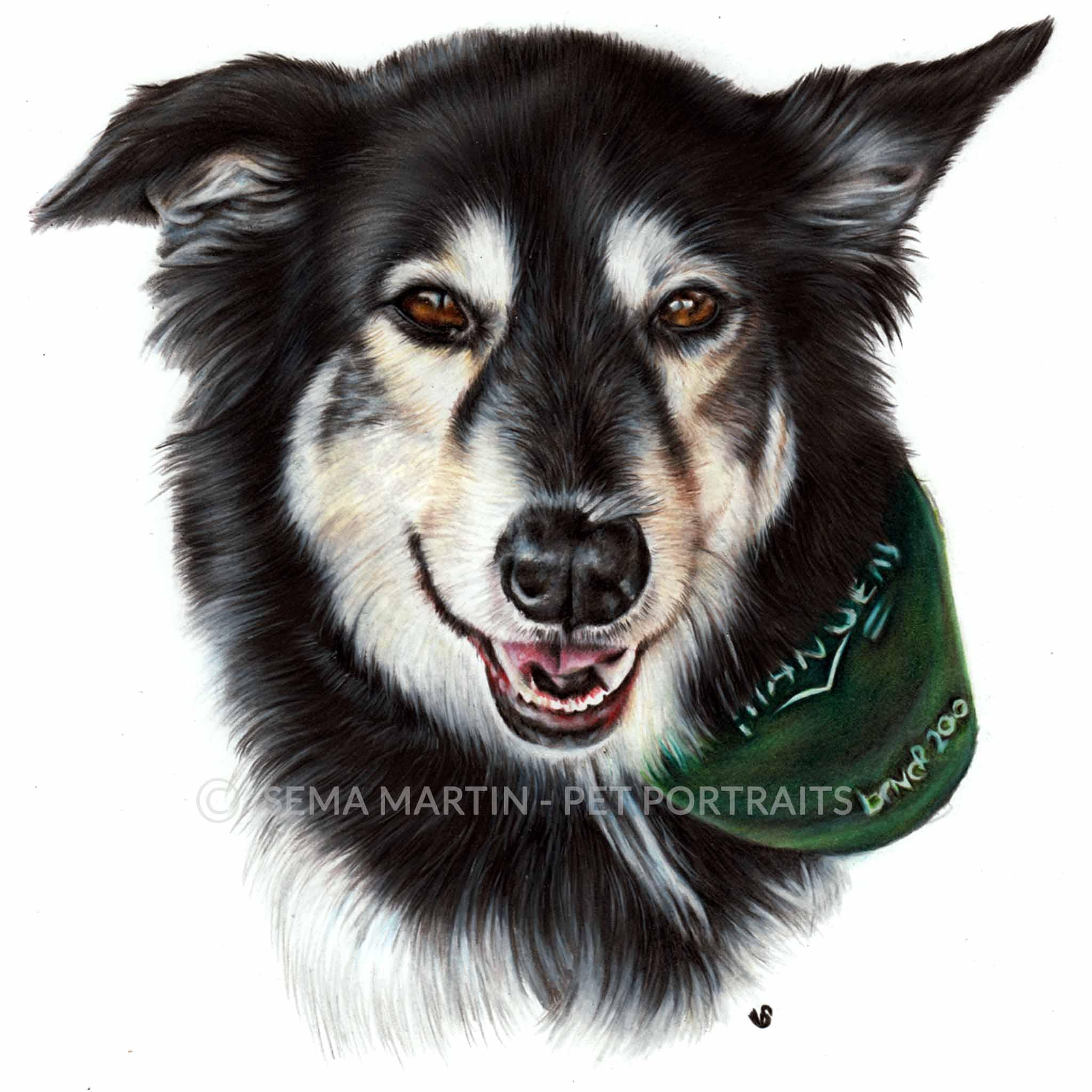 'Dolly' - USA, 8.3 x 11.7 inches, 2018, Colour Pencil Dog Portrait by Sema Martin