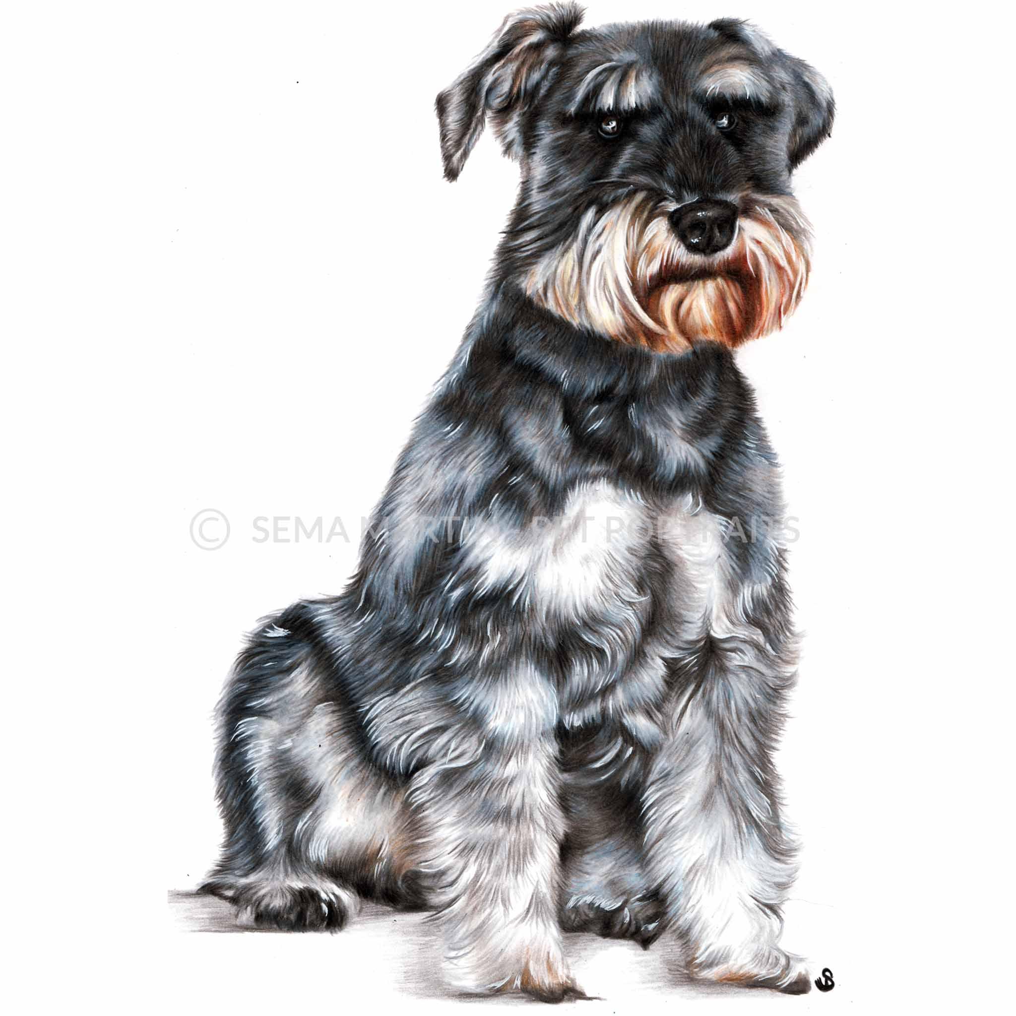 'Max' - UK, 8.3 x 11.7 inches, 2018, Colour Pencil Dog Portrait by Sema Martin