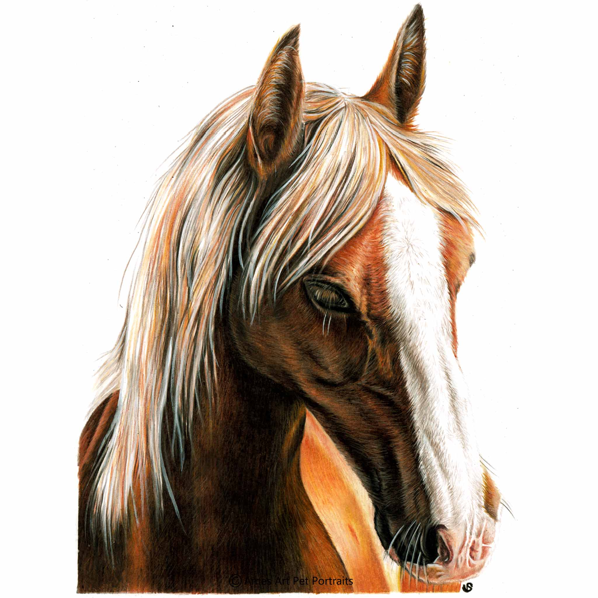 'Geri', UK, 11.7x16.5 inches, 2018, Colour Pencil Horse Portrait by Sema Martin