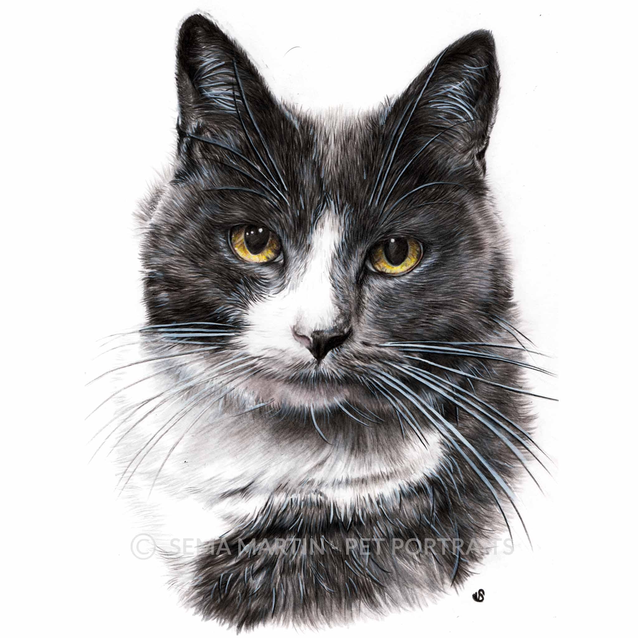'Charlie' - AUS, 8.3 x 11.7 inches, 2018, Colour Pencil Cat Portrait