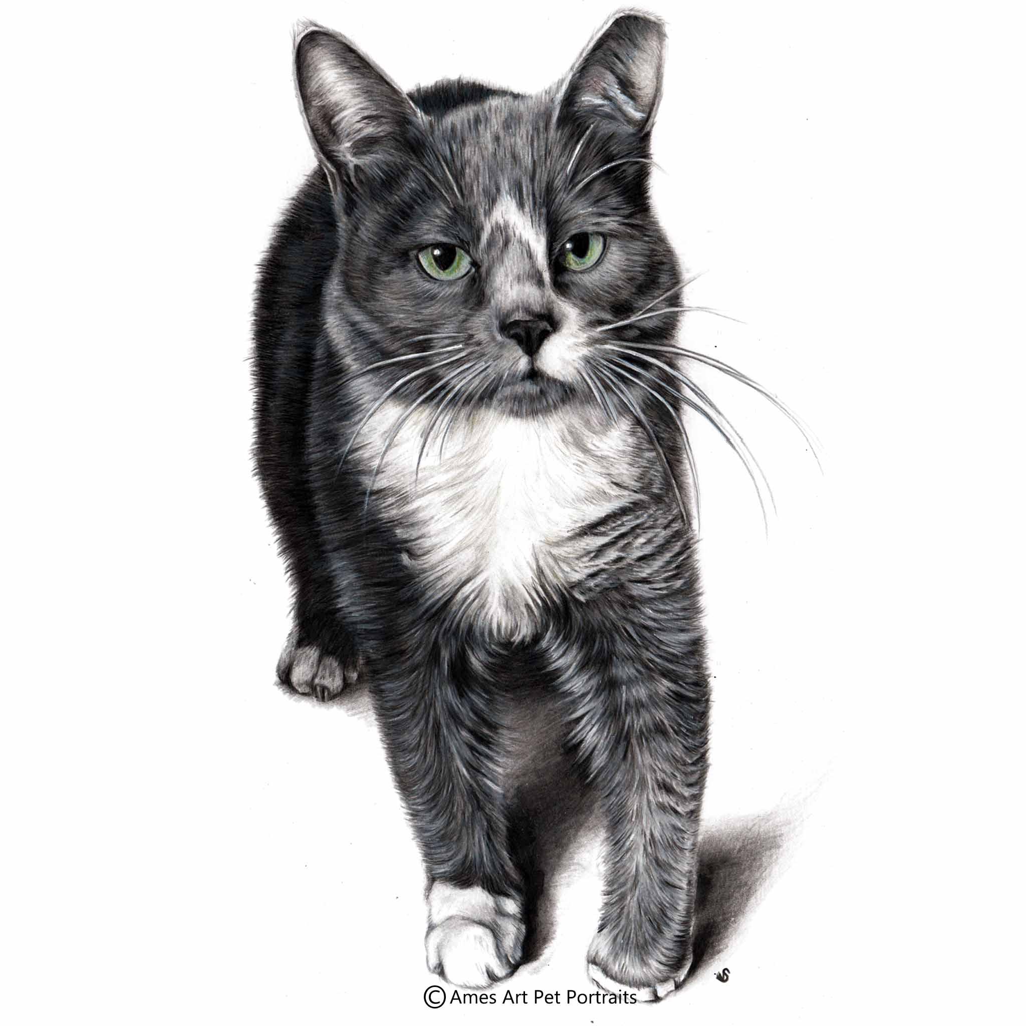 'Patches' - USA, 11.7 x 16.5 in, 2017, Color Pencil Cat Portrait