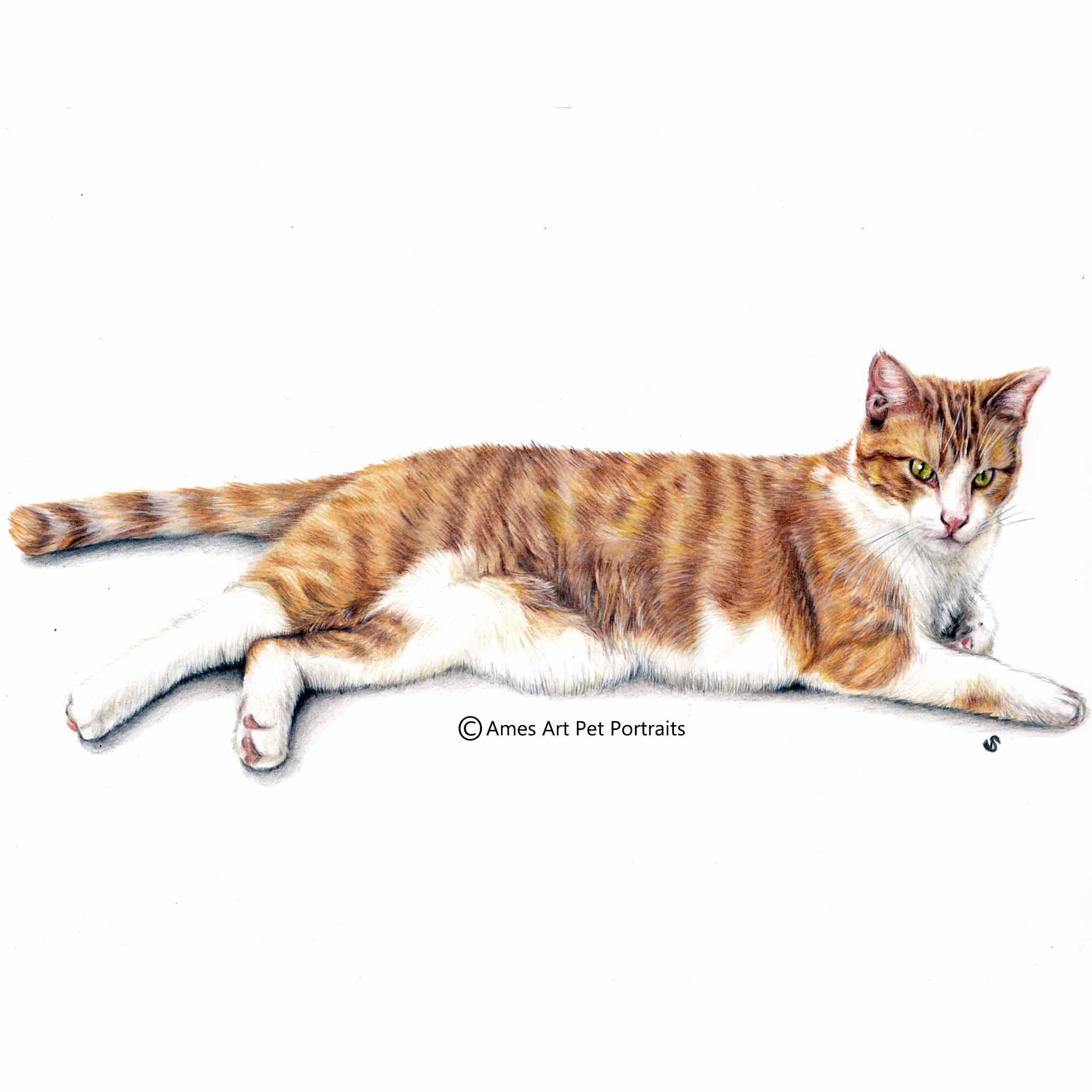 'Konani' - USA, 11.7 x 16.5 in, 2017, Color Pencil Cat Portrait