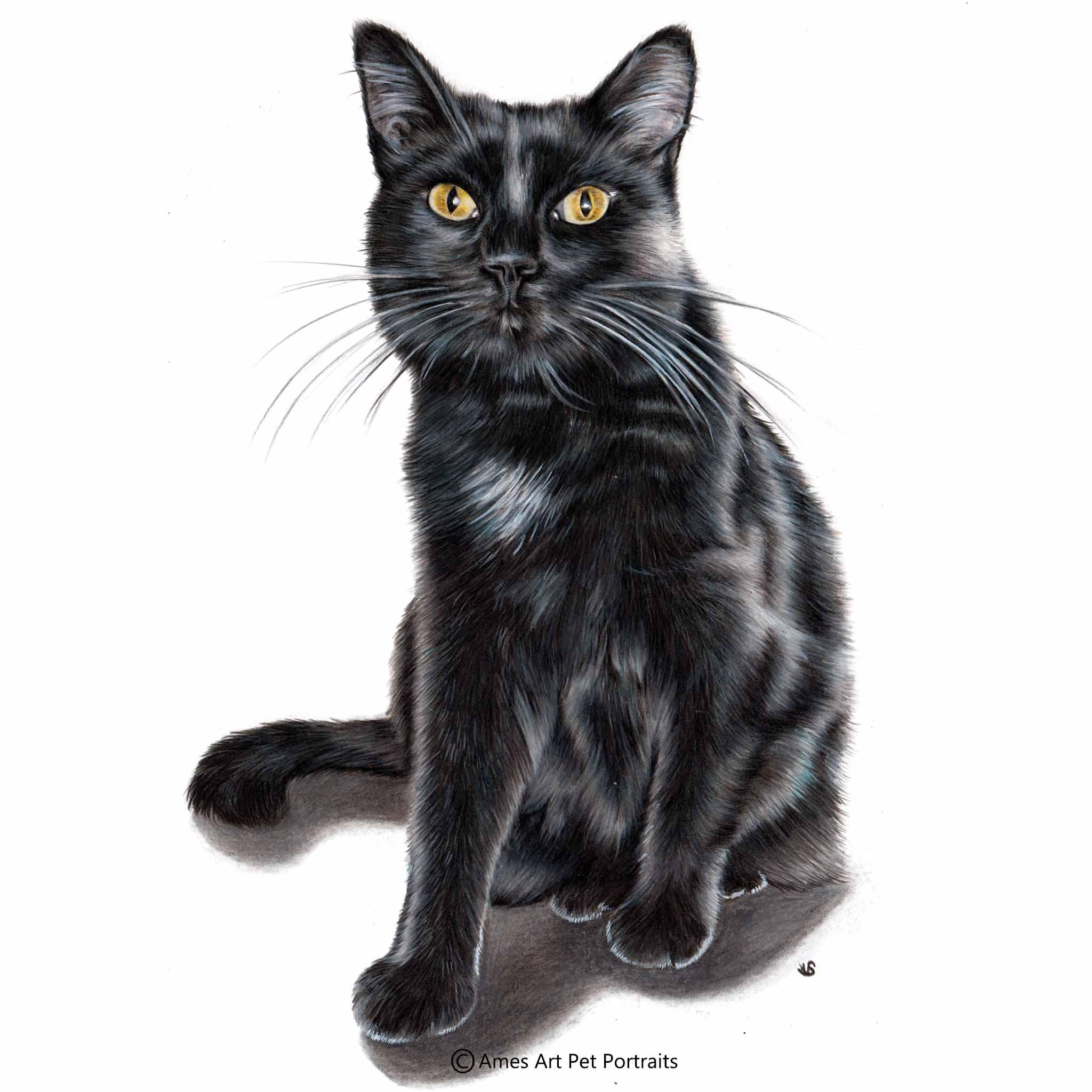 'BJ' - USA,11.7 x 16.5 inches, 2017, Color Pencil Cat Portrait