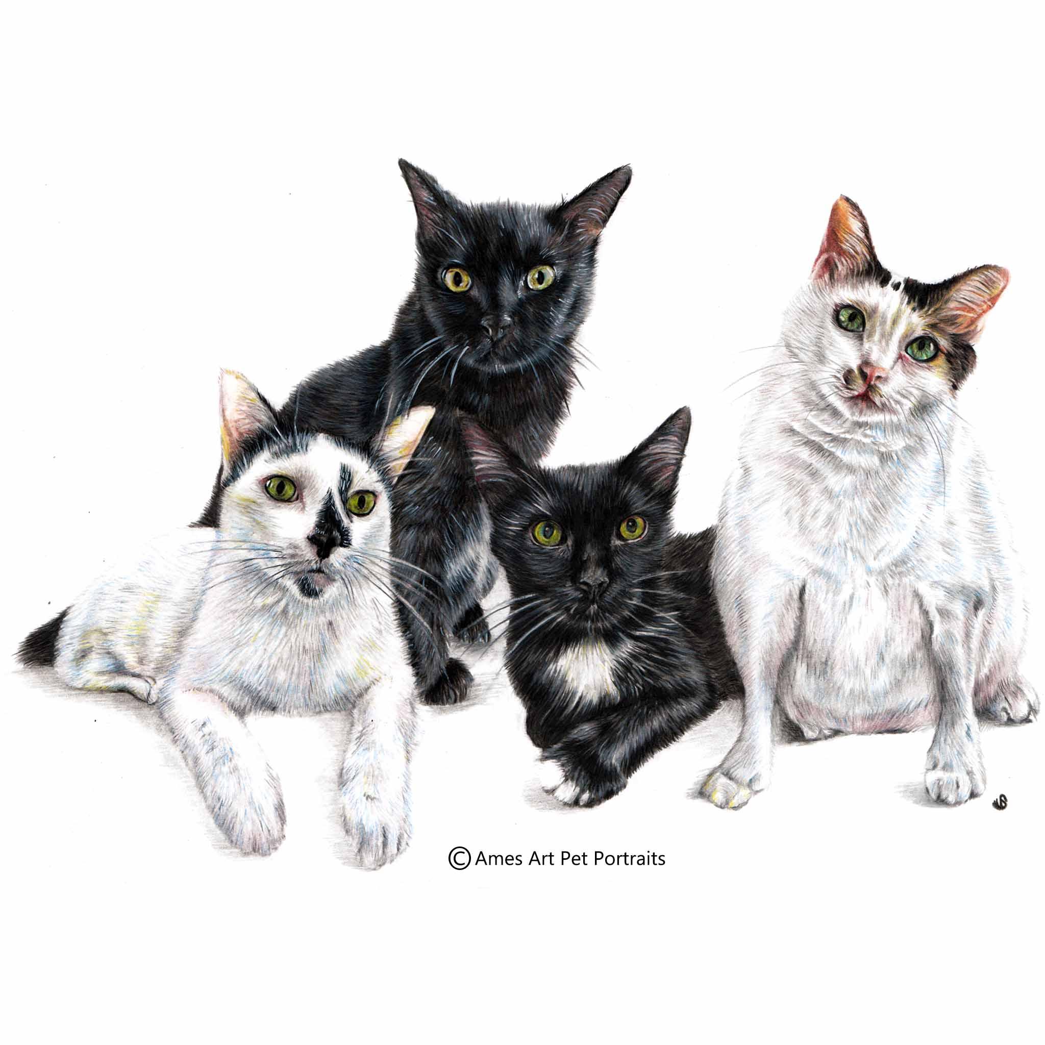 'Stitch, Quiche, Poopies and Oceanz' - Singapore, 11.7 x 16.5 in, 2017, Colour Pencil Cat Portrait