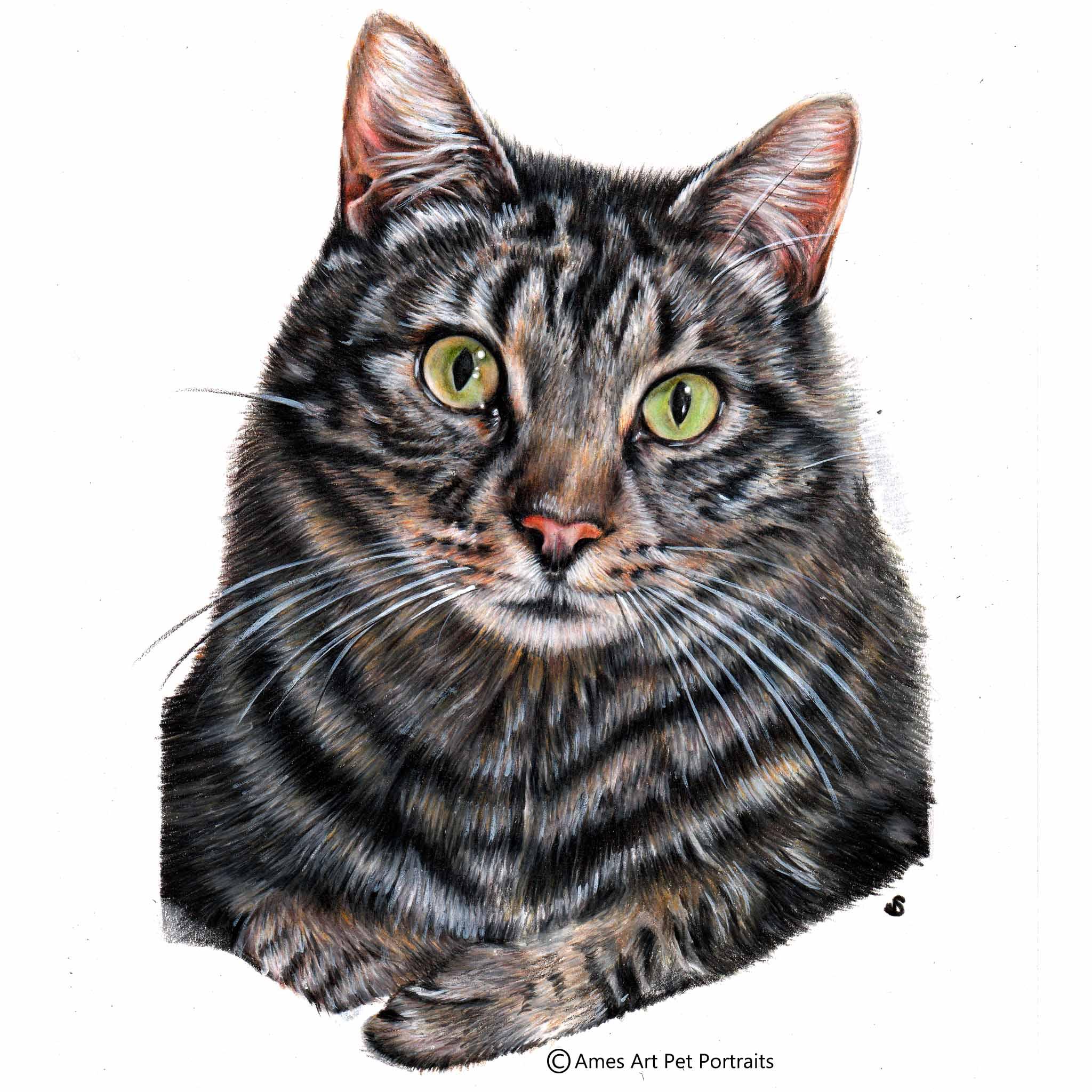 'Cooper' - AUS, 11.7 x 8.3 inches, 2017, Colour Pencil Cat Portrait