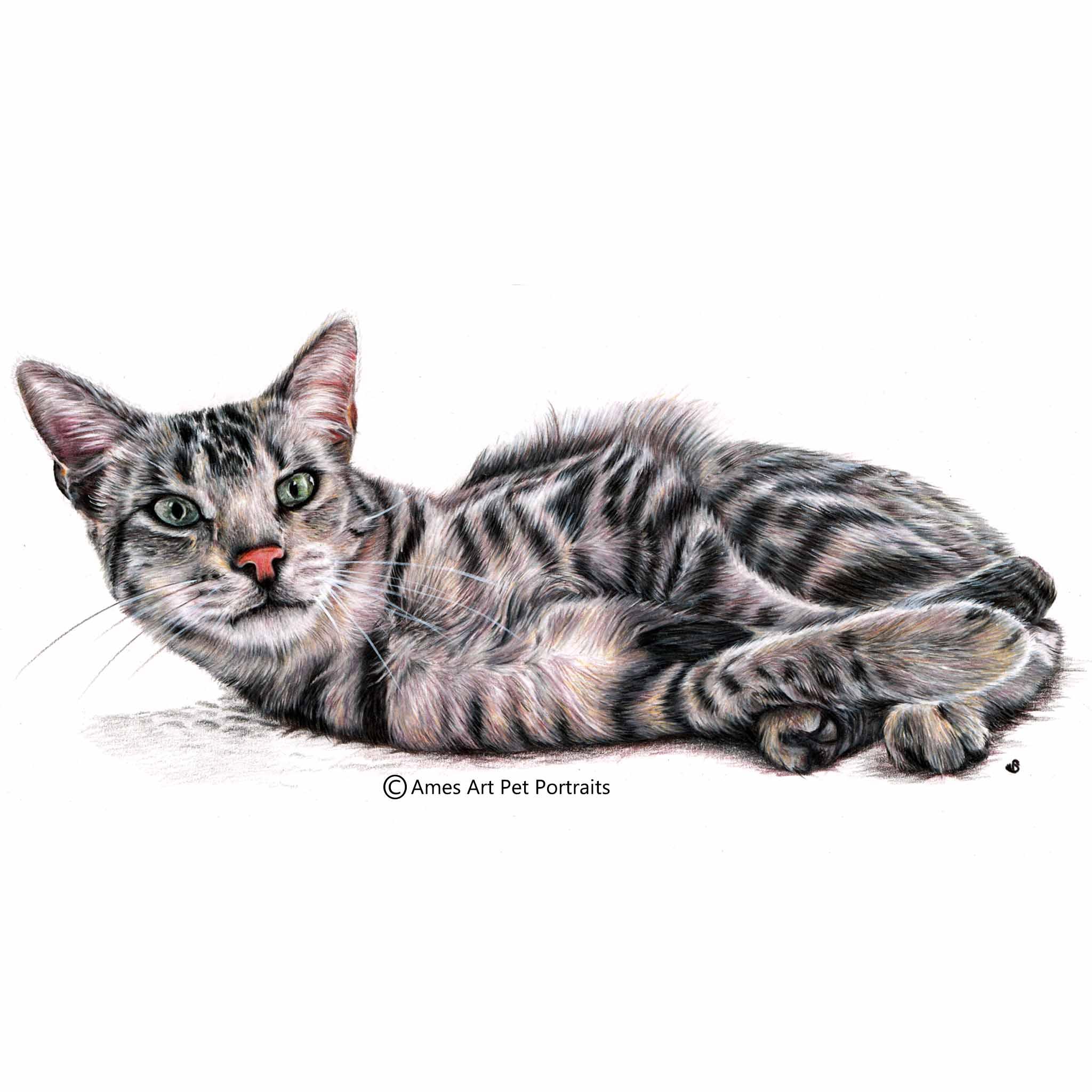 'Jarhar' - USA, 16.5 x 11.7 inches, 2017, Color Pencil Cat Portrait