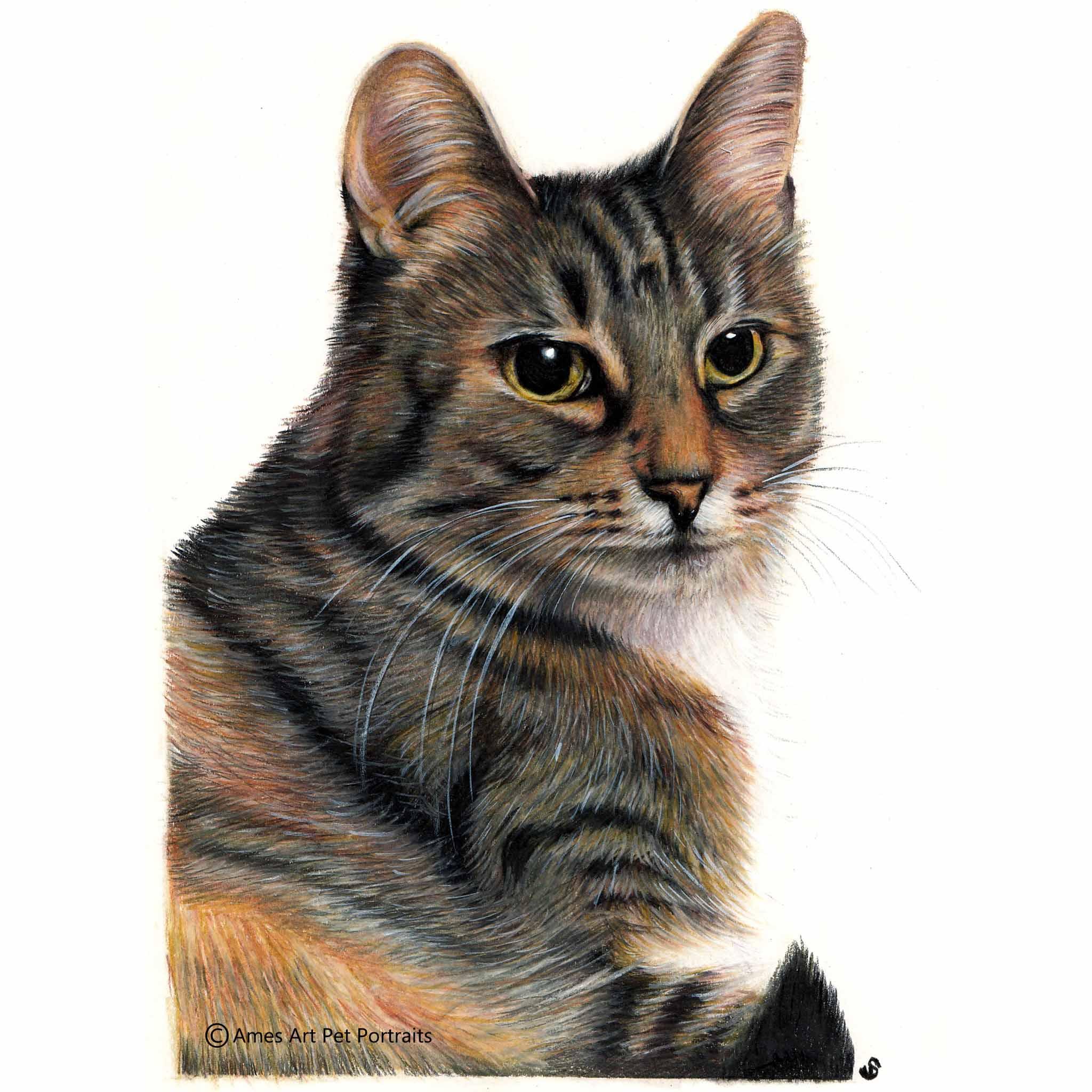 'Stray' - USA, 8.3 x 11.7 inches, 2017, Color Pencil Cat Portrait