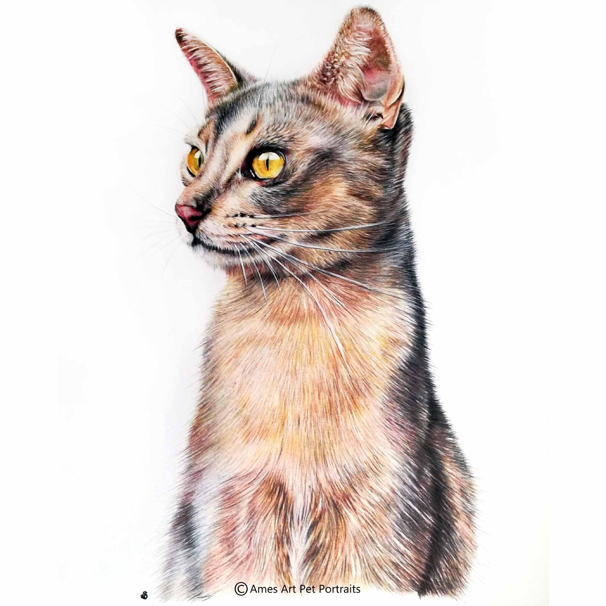 'Storm' - AUS, 11.7 x 16.5 inches, 2017, Colour Pencil Cat Portrait