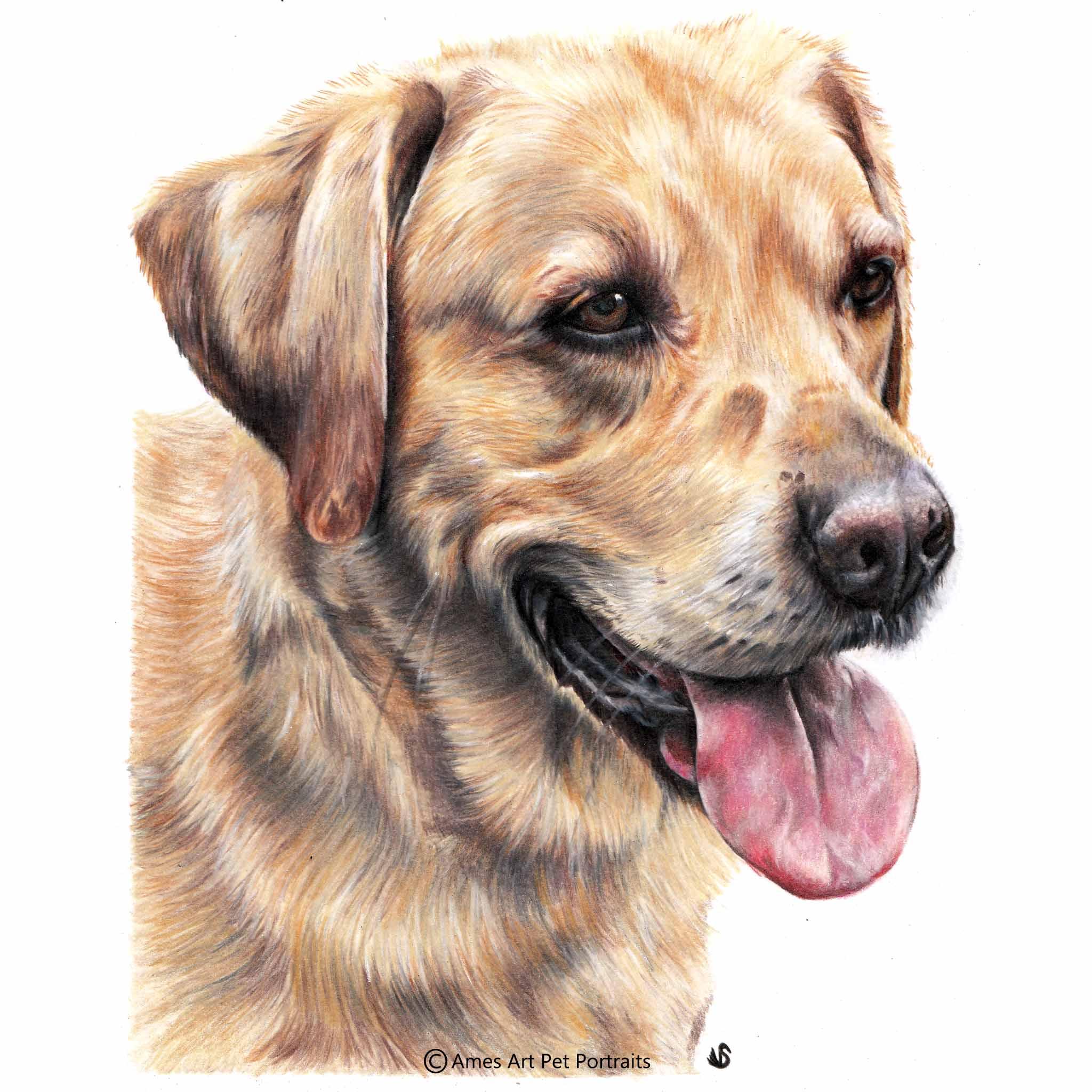 'Oscar' - UK, 8.5 x 11.7 inches, 2017, Colour Pencil Dog Portrait