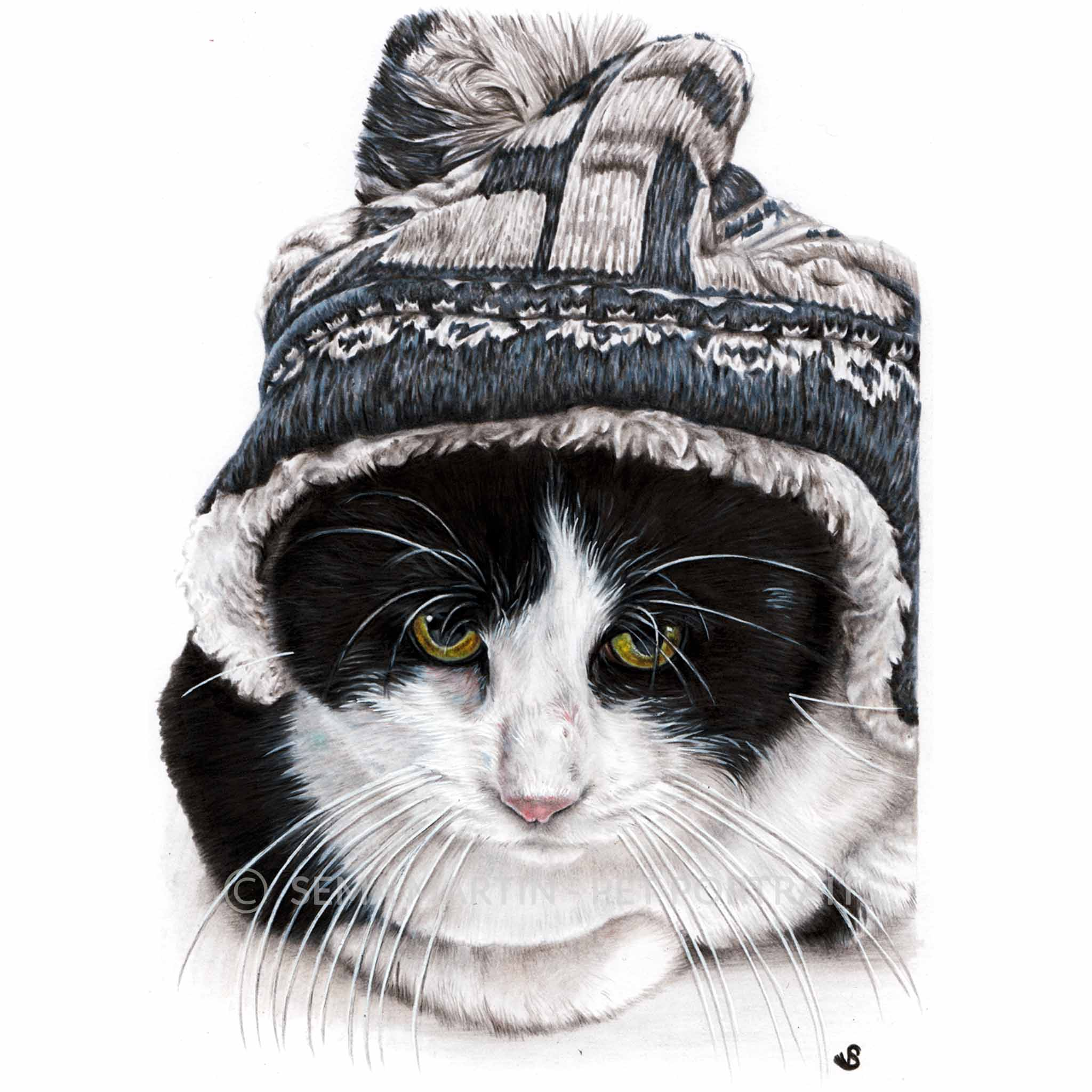 colour pencil cat portrait of tuxedo cat in a wooly hat with yellow eyes by artist sema martin