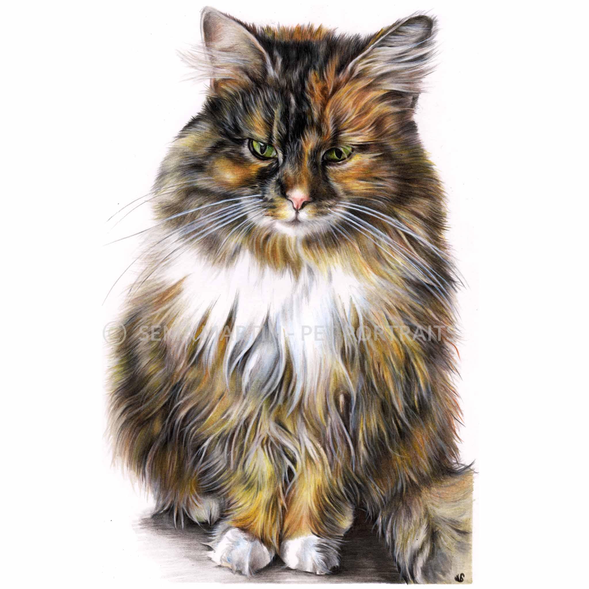 'Chanel' - UK, 8.3 x 11.7 inches, 2018, Colour Pencil Cat Portrait by Sema Martin