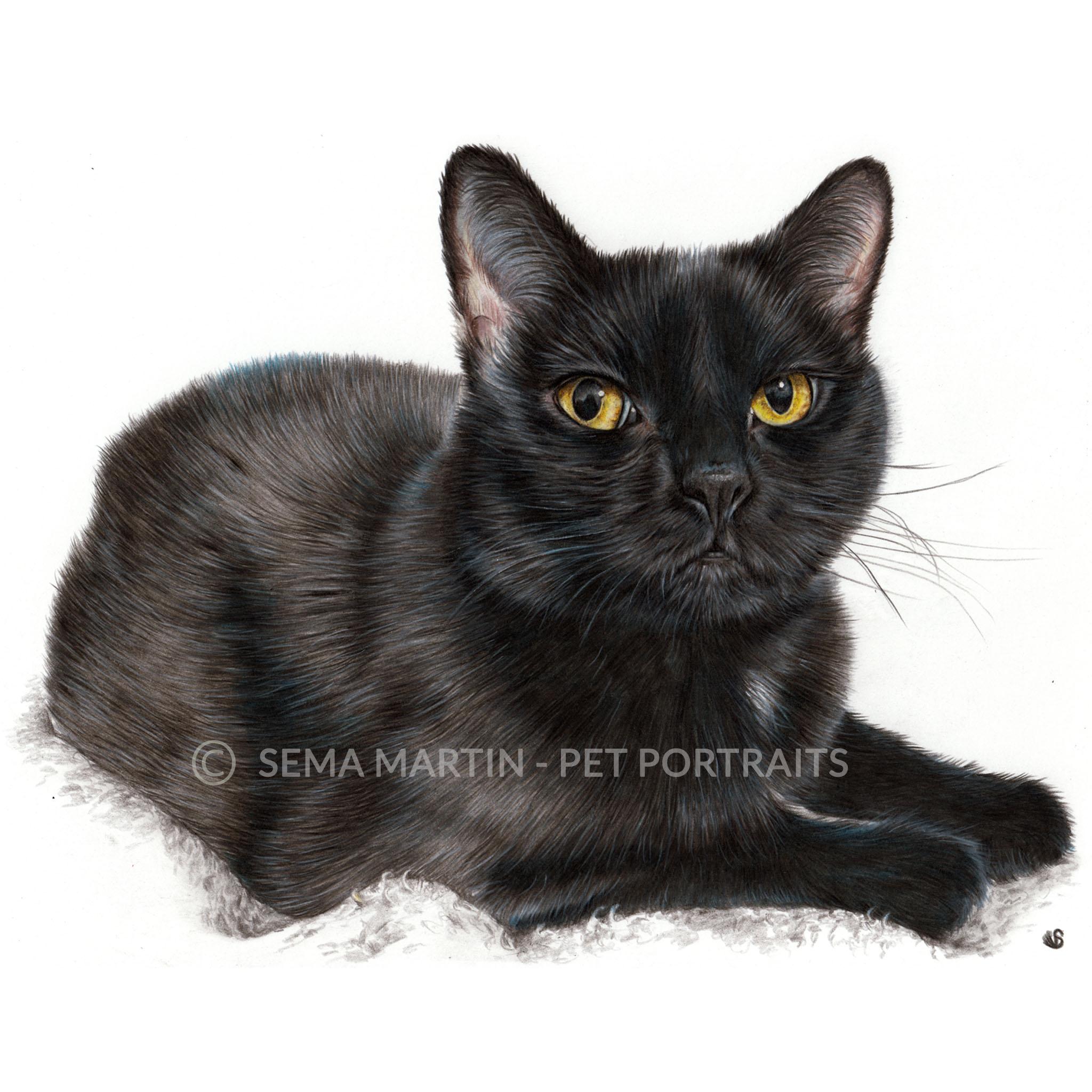 'Cammy' - USA, 8.3 x 11.7 inches, 2018, Colour Pencil Black Cat Portrait by Sema Martin