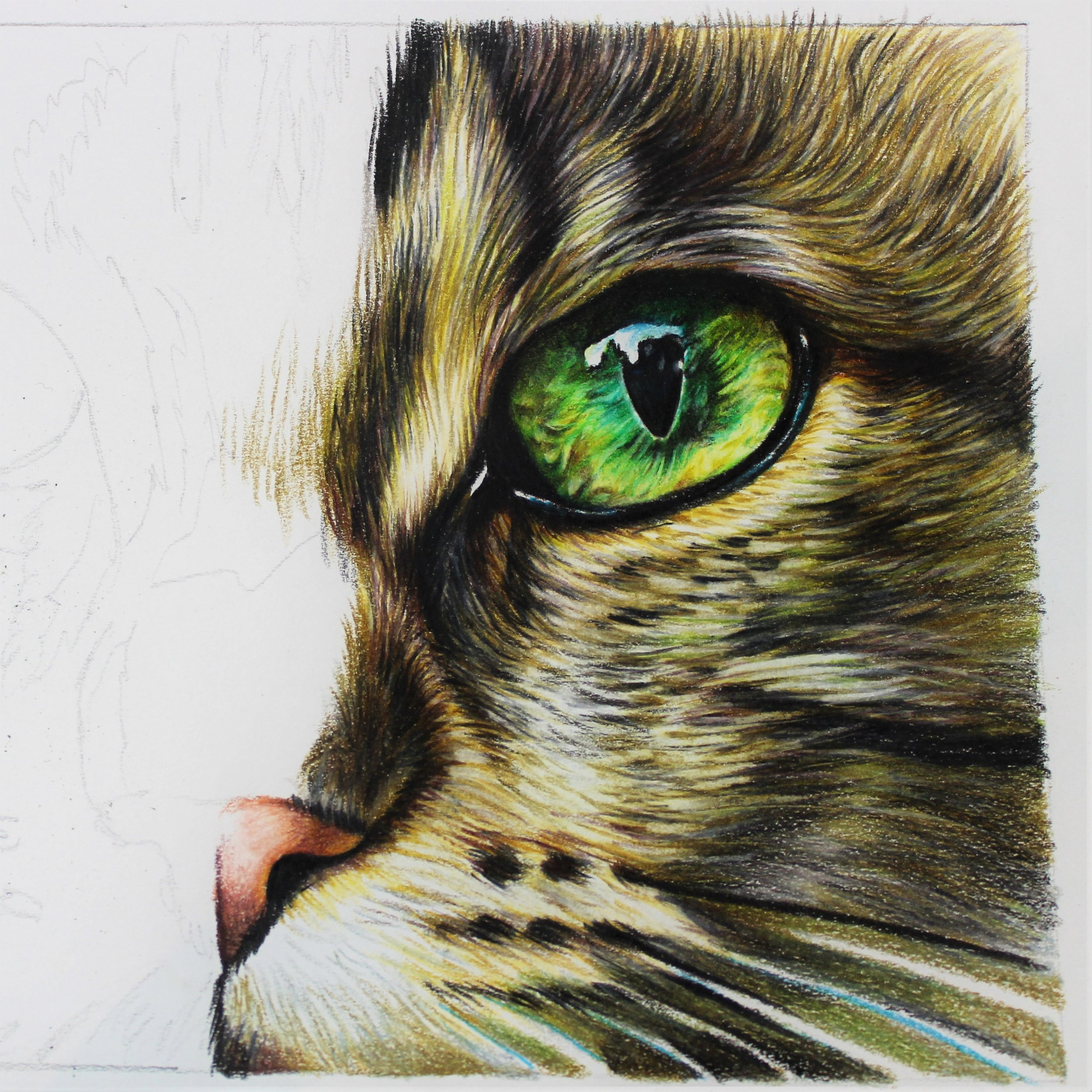 Arteza art supplies, cat eye study, sema martin pet portrait artist