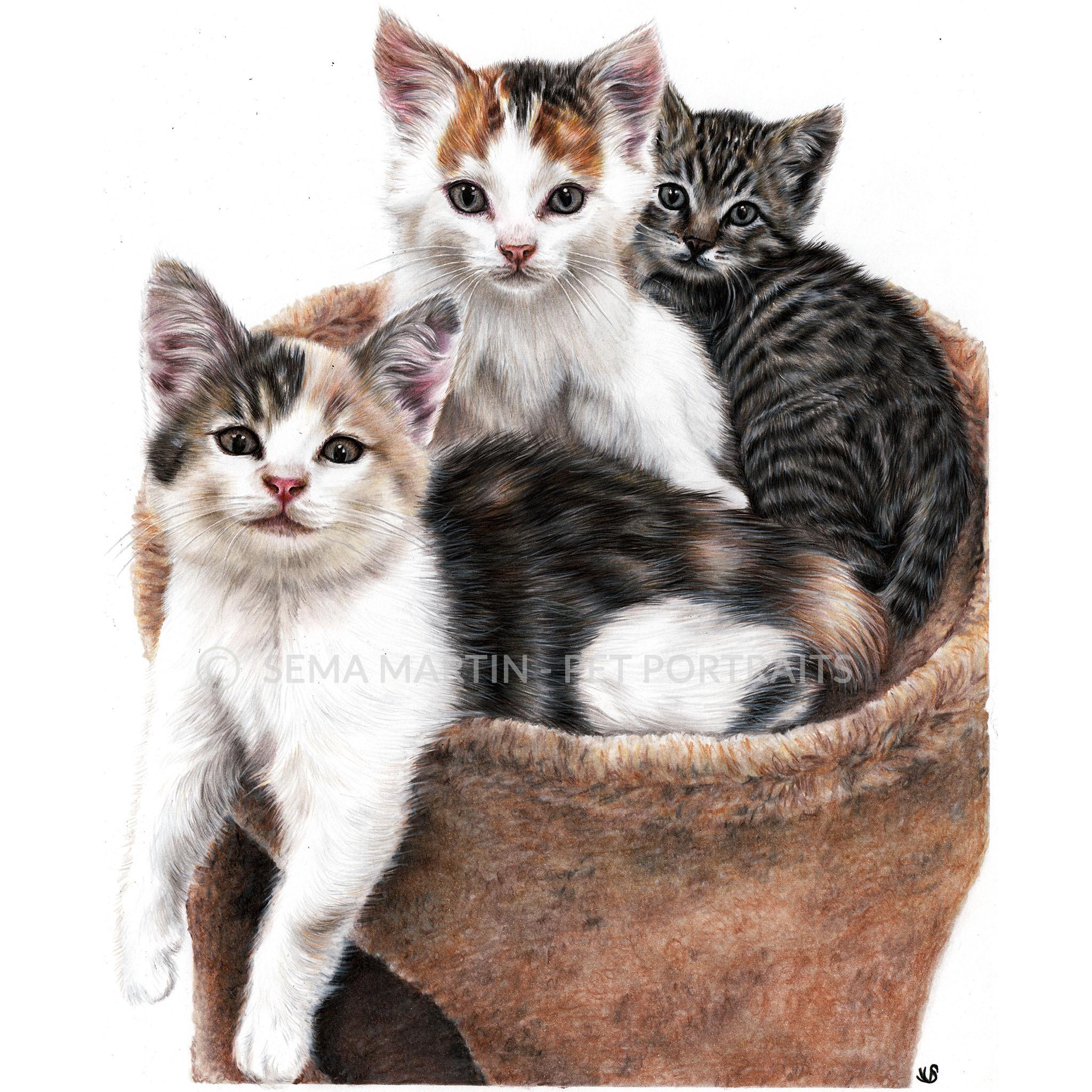'Kai, Keikoa & LeiLani' - USA, 11.7 x 16.5 inches, 2019, Colored pencil portrait of three kittens