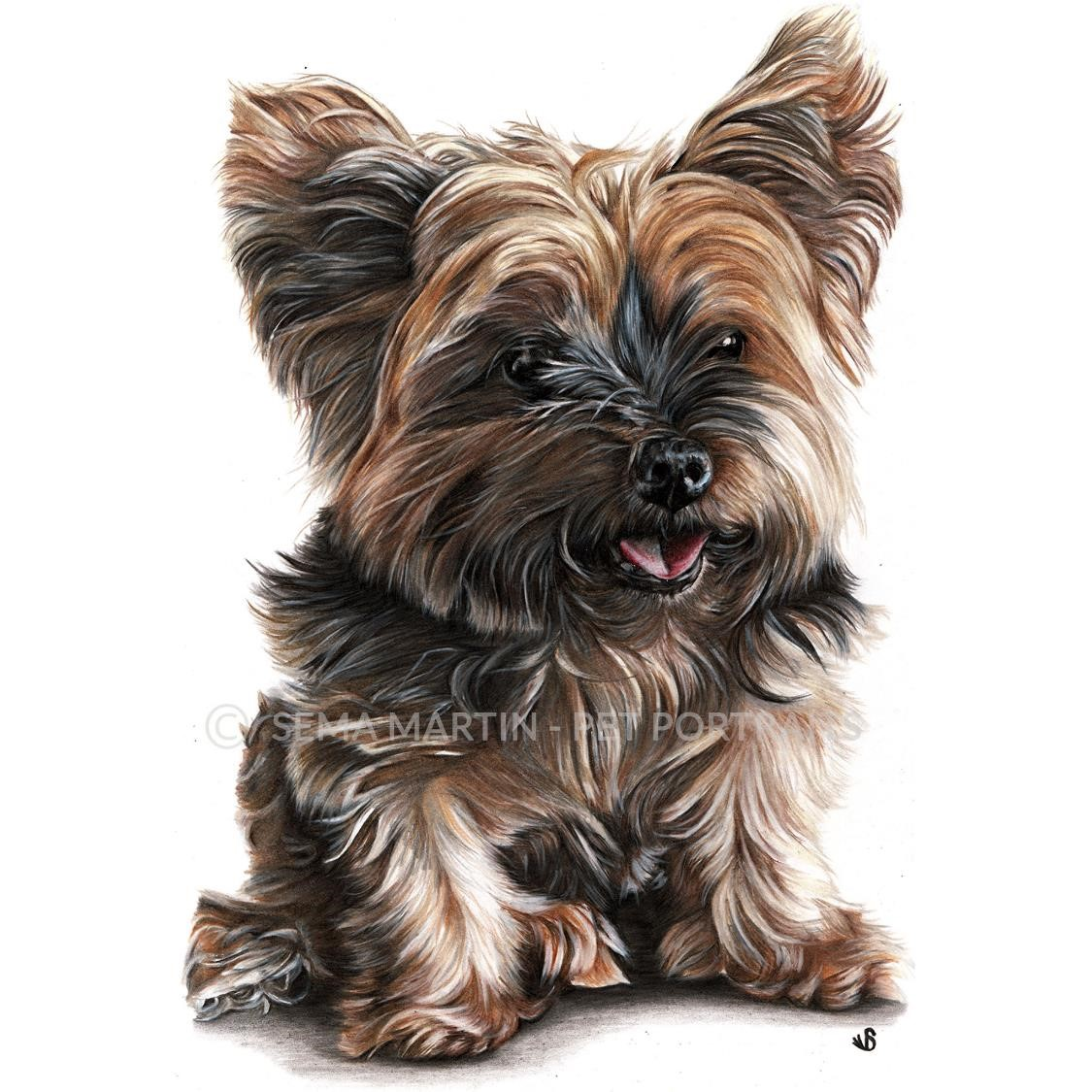 'Mitzi' - UK, 8.3 x 11.7 inches, 2019, Colour Pencil Yorkshire Terrier Portrait