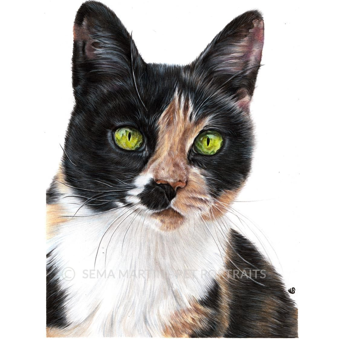 'Perkins' - USA, 8.3 x 11.7 inches, 2019, Color Pencil Portrait of a Tortoiseshell Cat