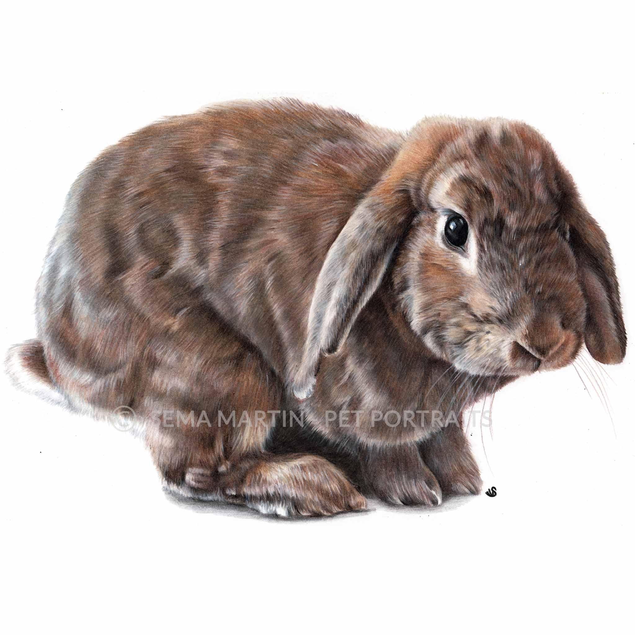 'Tink' - UK, 8.3 x 11.7 inches, 2019, Colour Pencil Portrait of a Rabbit