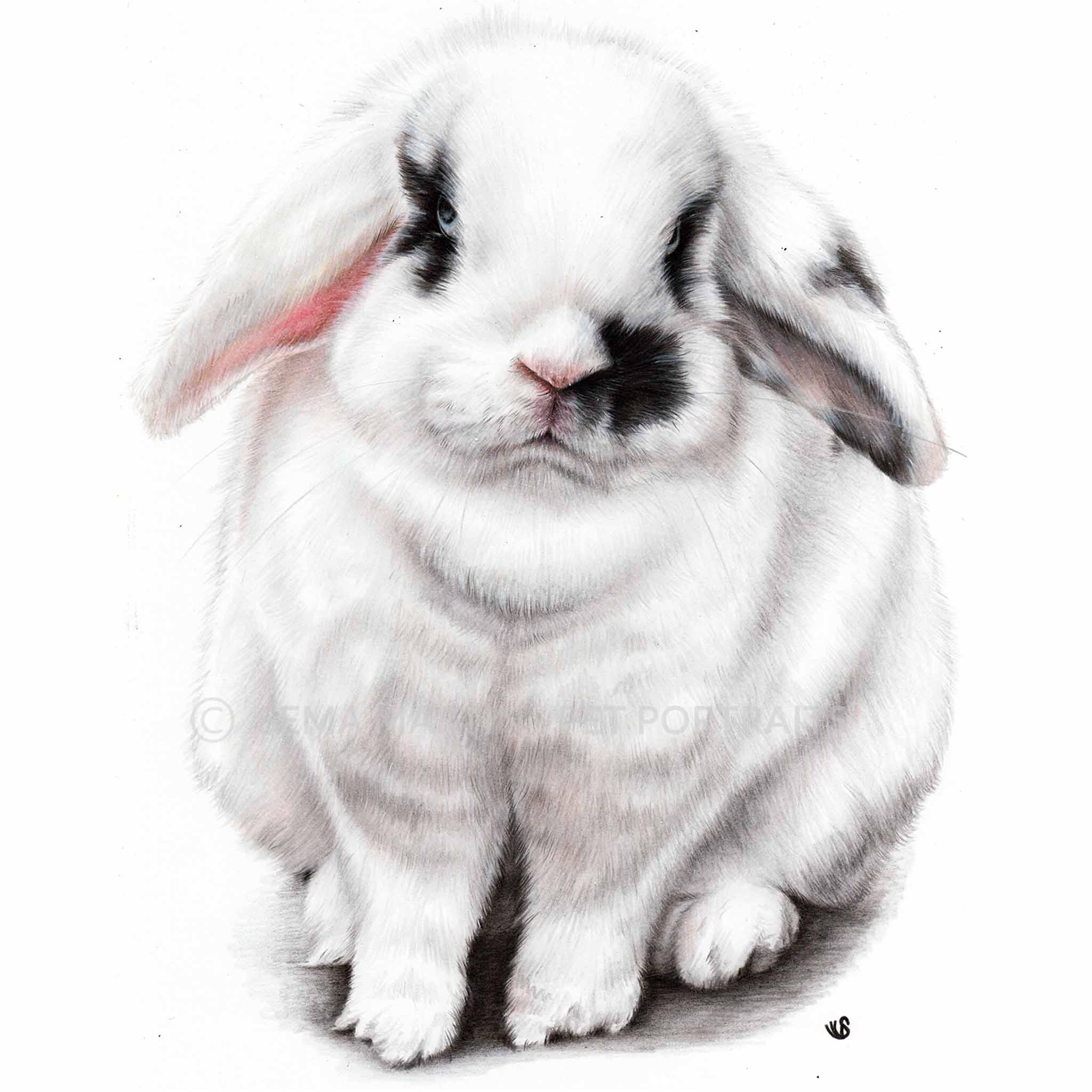 'Candy' - UK, 8.3 x 11.7 inches, 2019, Colour Pencil Portrait of a Rabbit