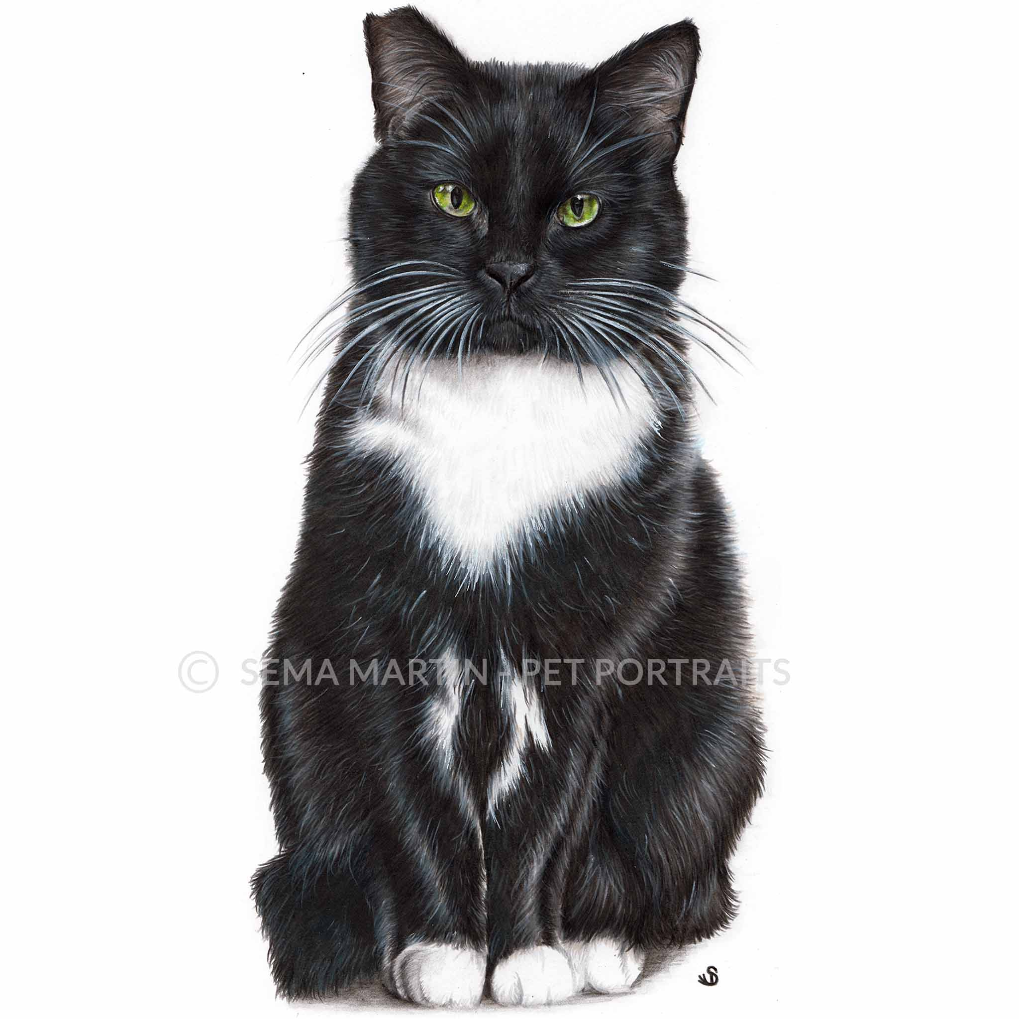 Copy of 'Poppy' - UK, 8.3 x 11.7 inches, 2018, Colour Pencil Tuxedo Cat Portrait by Sema Martin