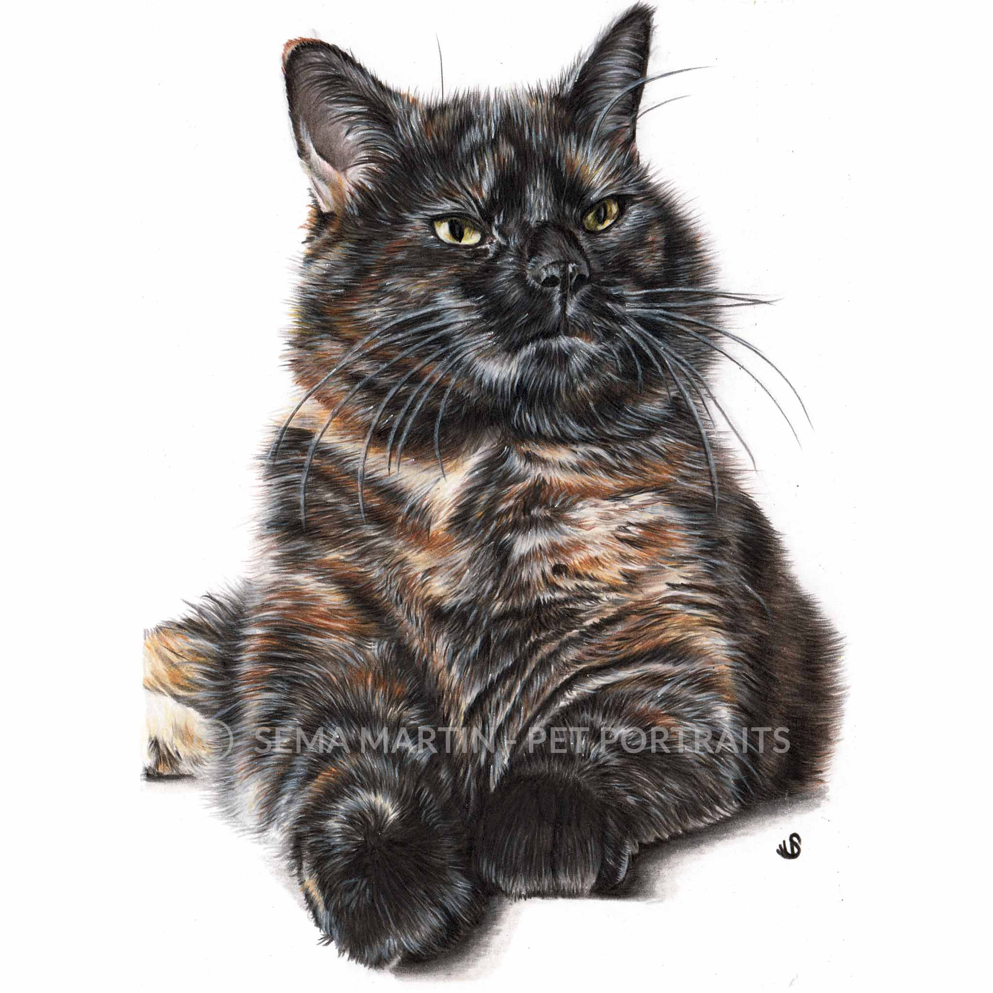 Tortie tortoisechell colour pencil cat portrait in Worcester uk by sema martin pet portrait artist