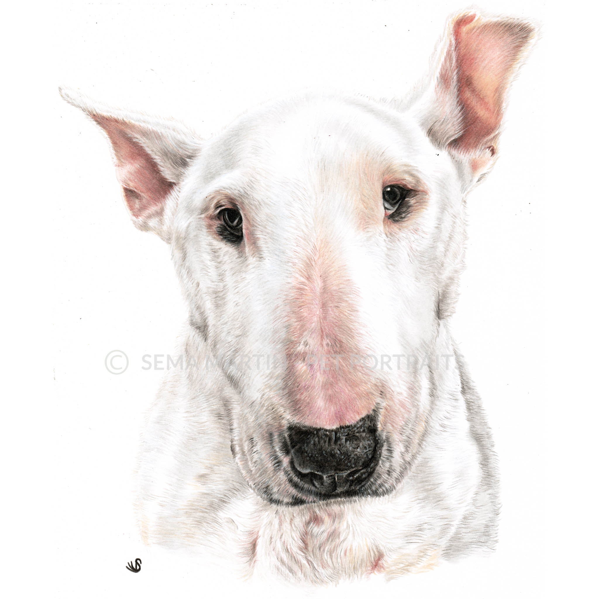 'Babbers' - UK, 8.3 x 11.7 inches, 2019, Colour Pencil Portrait of a Bull Terrier