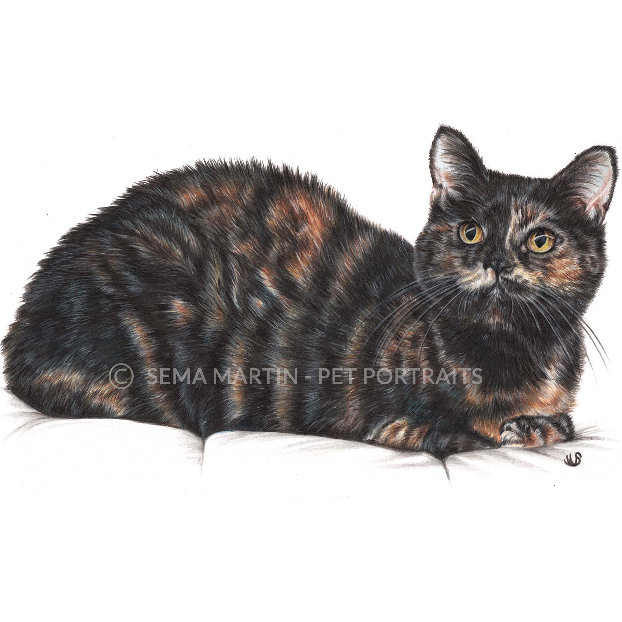 'Mitzi' - USA, 8.3 x 11.7 inches, 2019, Custom Color Pencil Tortie Cat Portrait